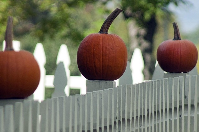 How to Grow Halloween Pumpkins For Your Kids and Guests to Enjoy