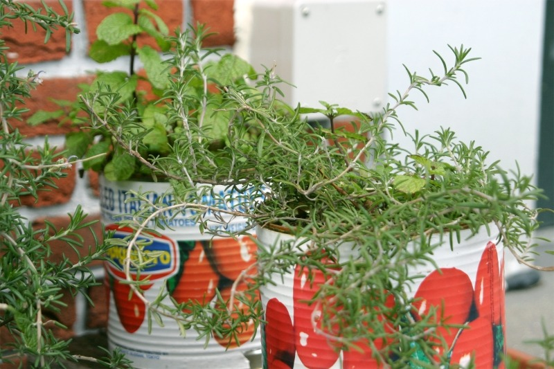 Grow this 1 Vegetable + 4 Herbs to Prepare for Cold & Flu