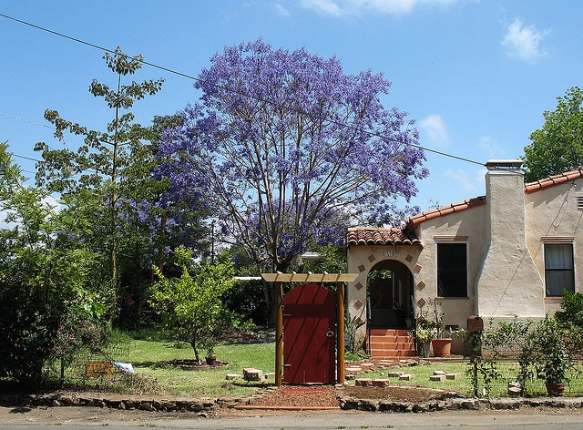 A jacaranda tree in front of a San Diego home