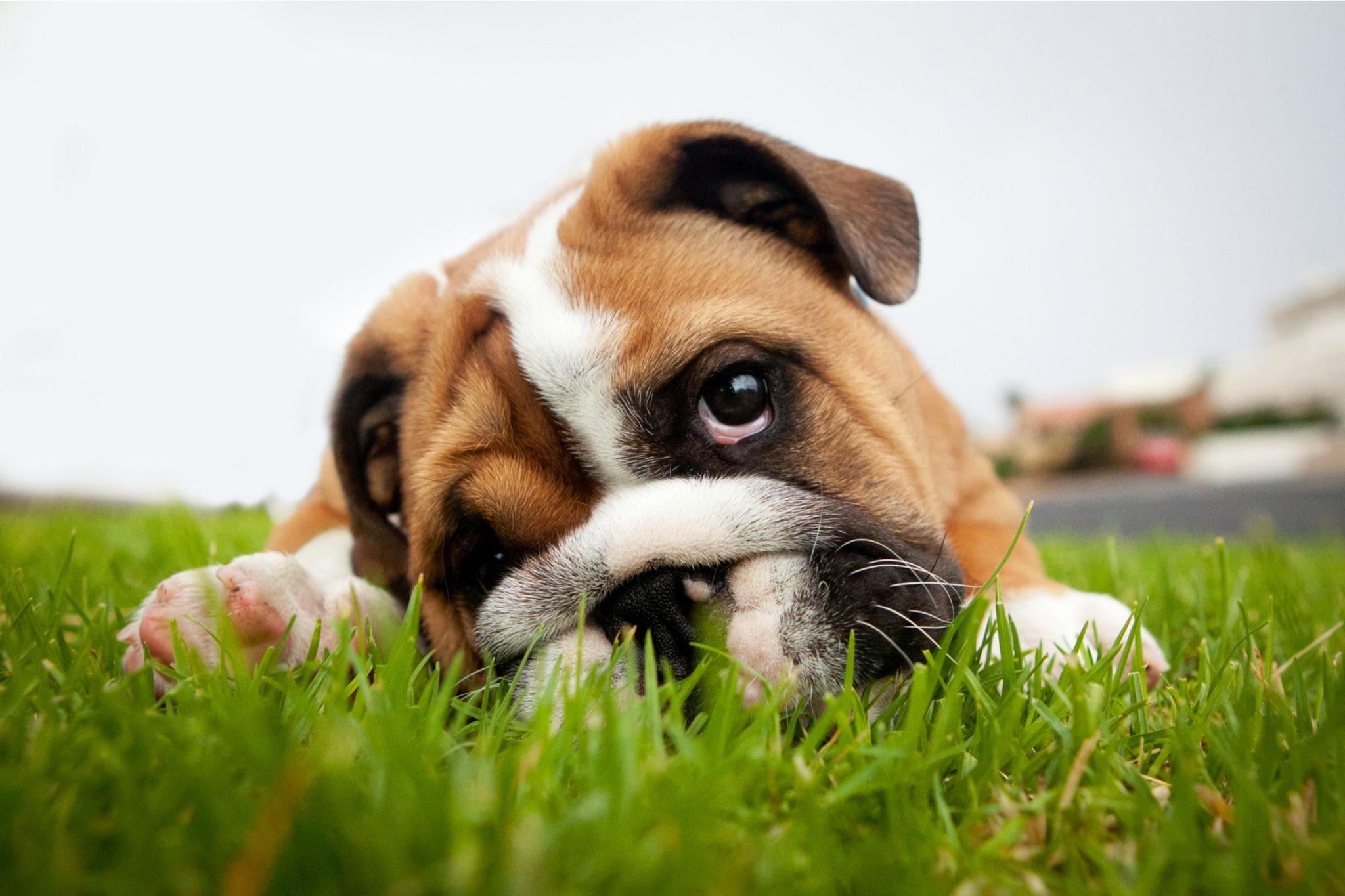 how to remove dog urine artificial grass