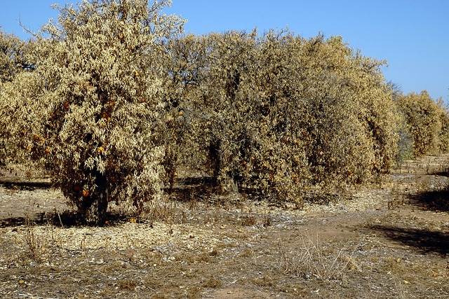 trees under drought stress