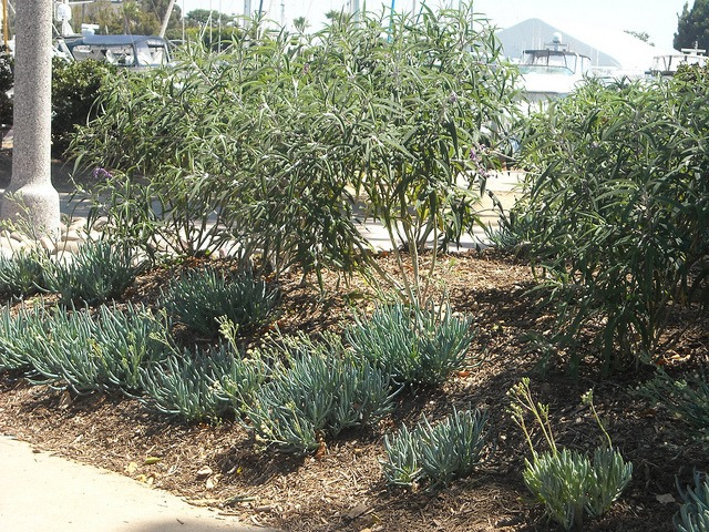 Waterwise plants and trees planted by Port of San Diego