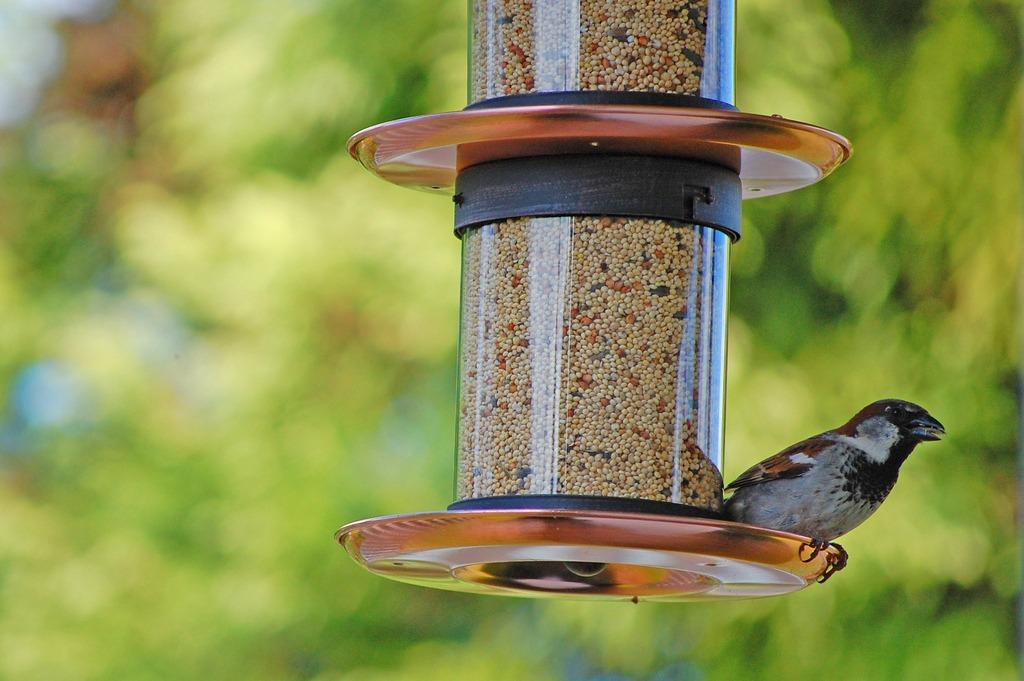 how to feed backyard birds