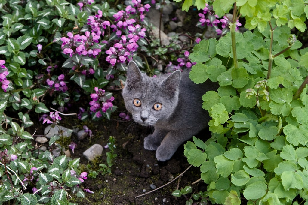 Tips for a cat-friendly yard