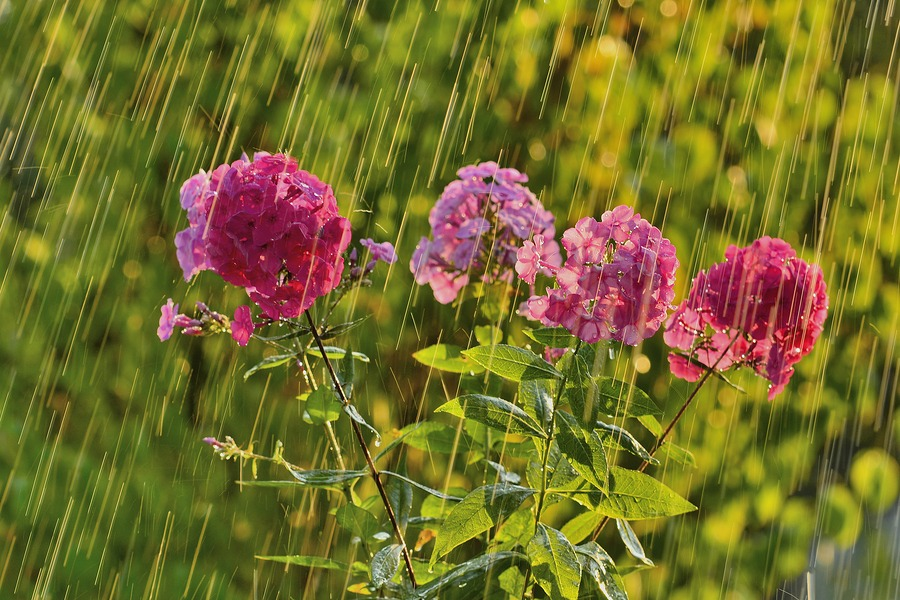 Tips for gardening in the rain