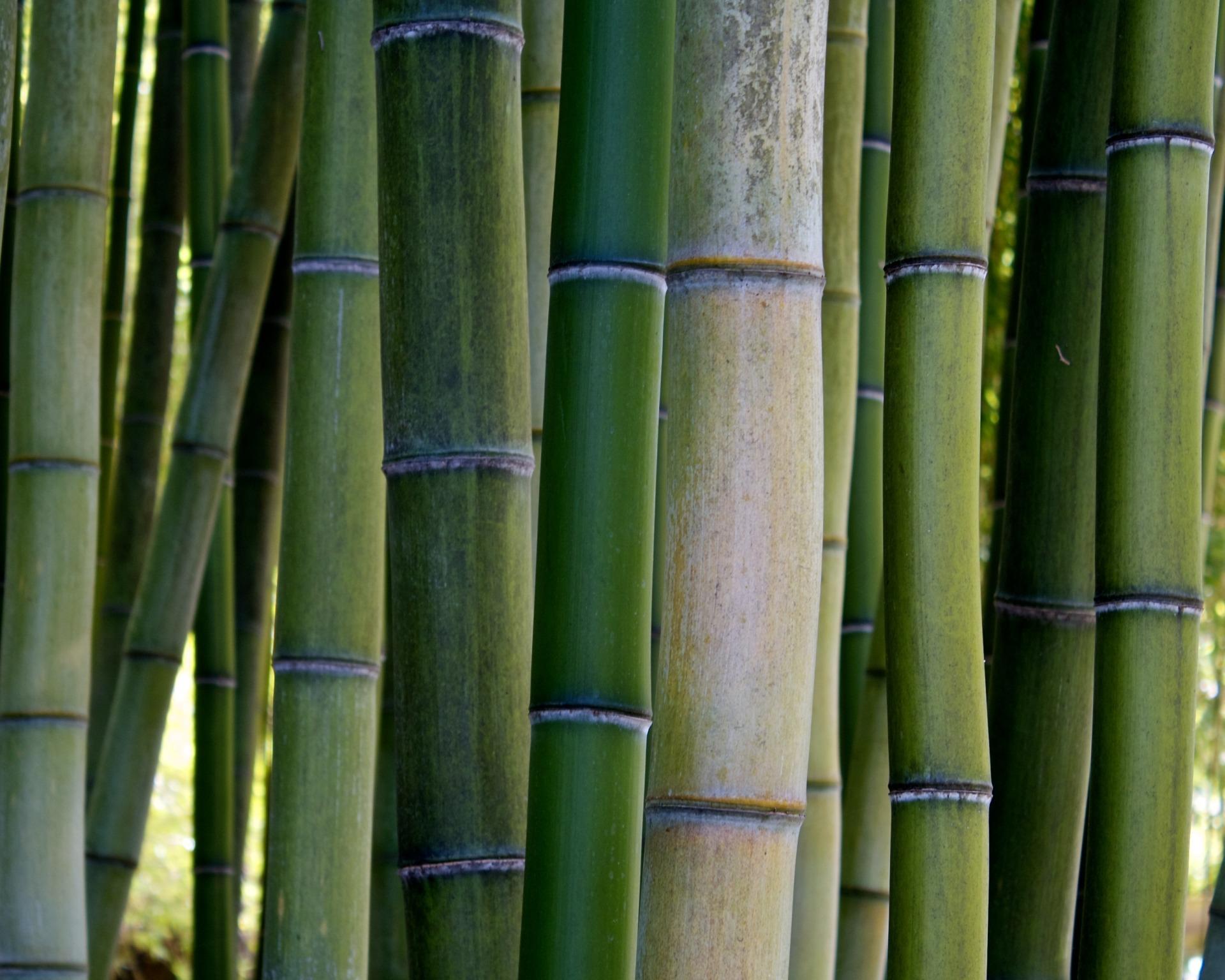 Bamboo Wind Break