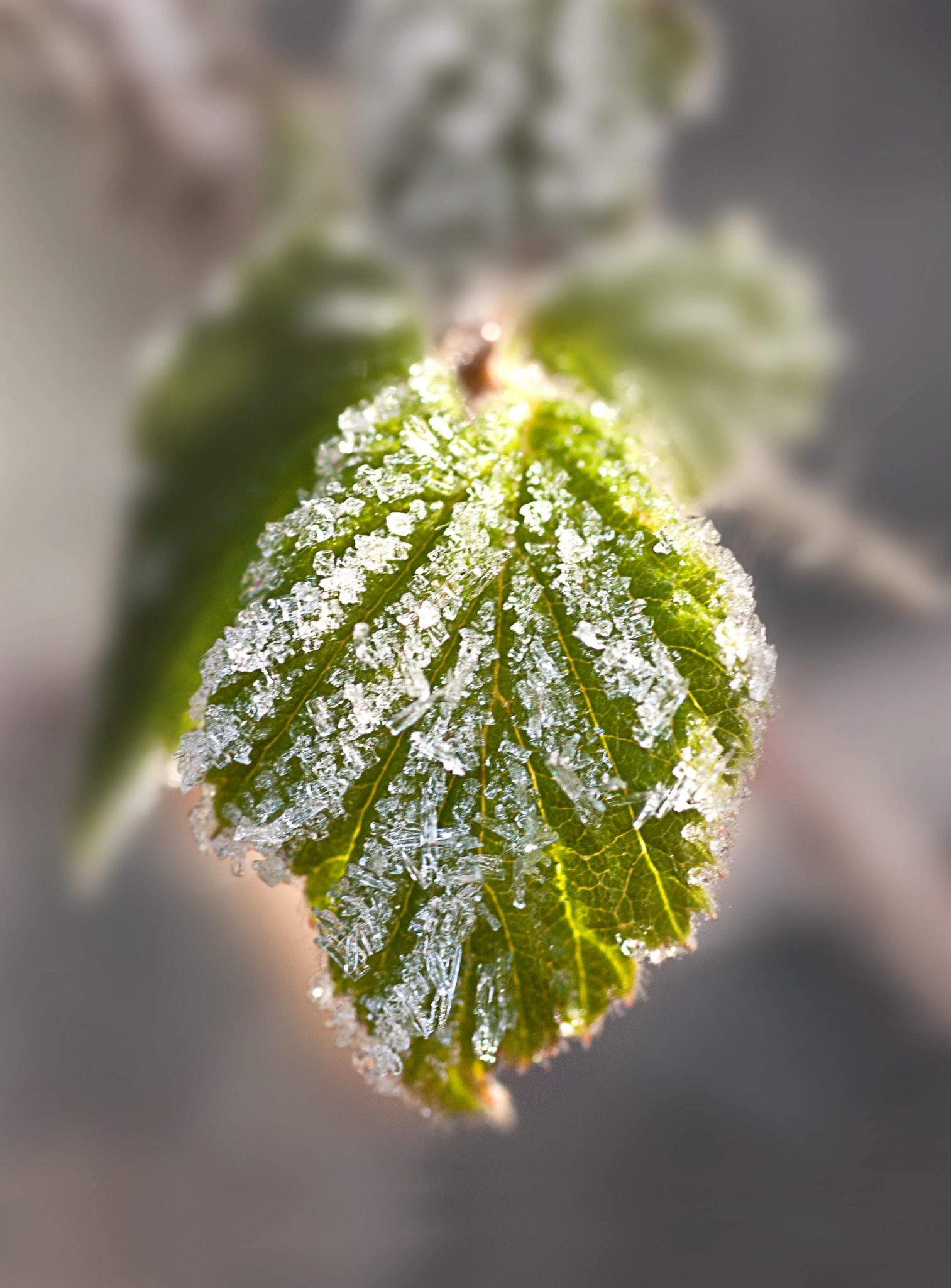 How to Protect Your Garden from Wind, Frost + Freezes