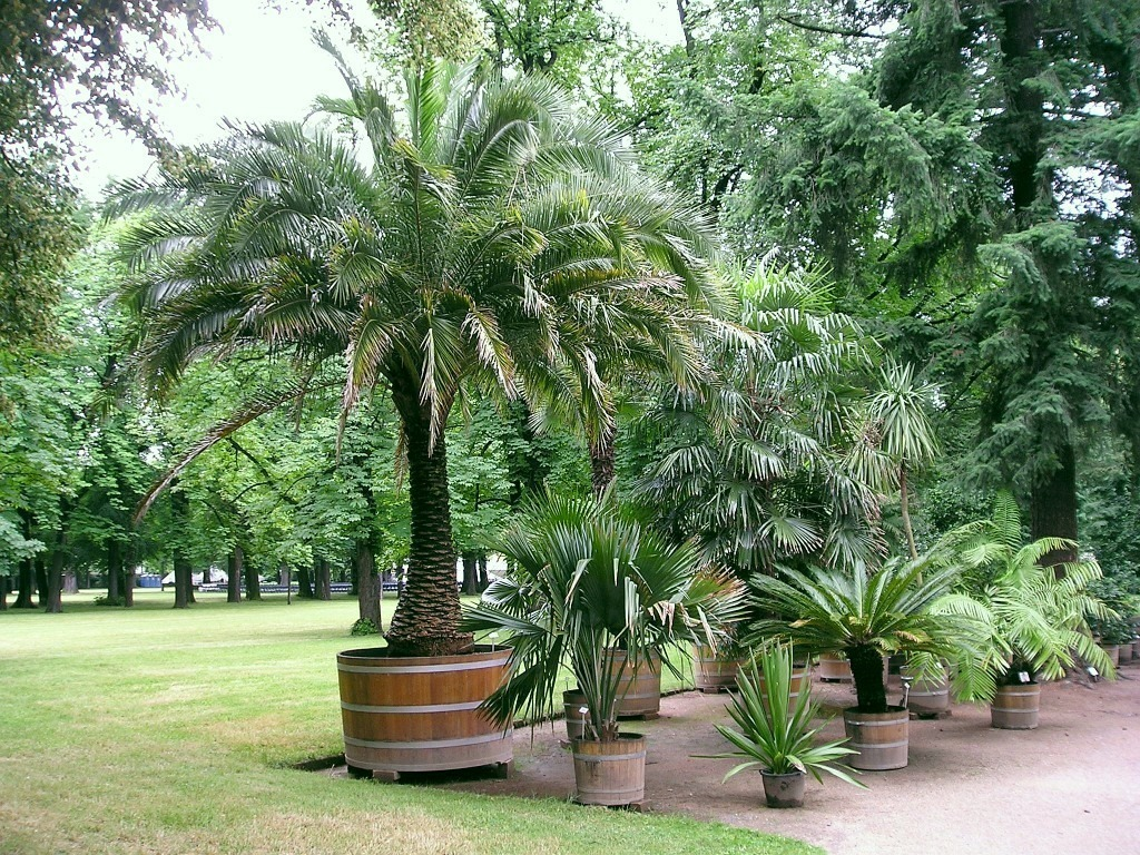 small palm trees