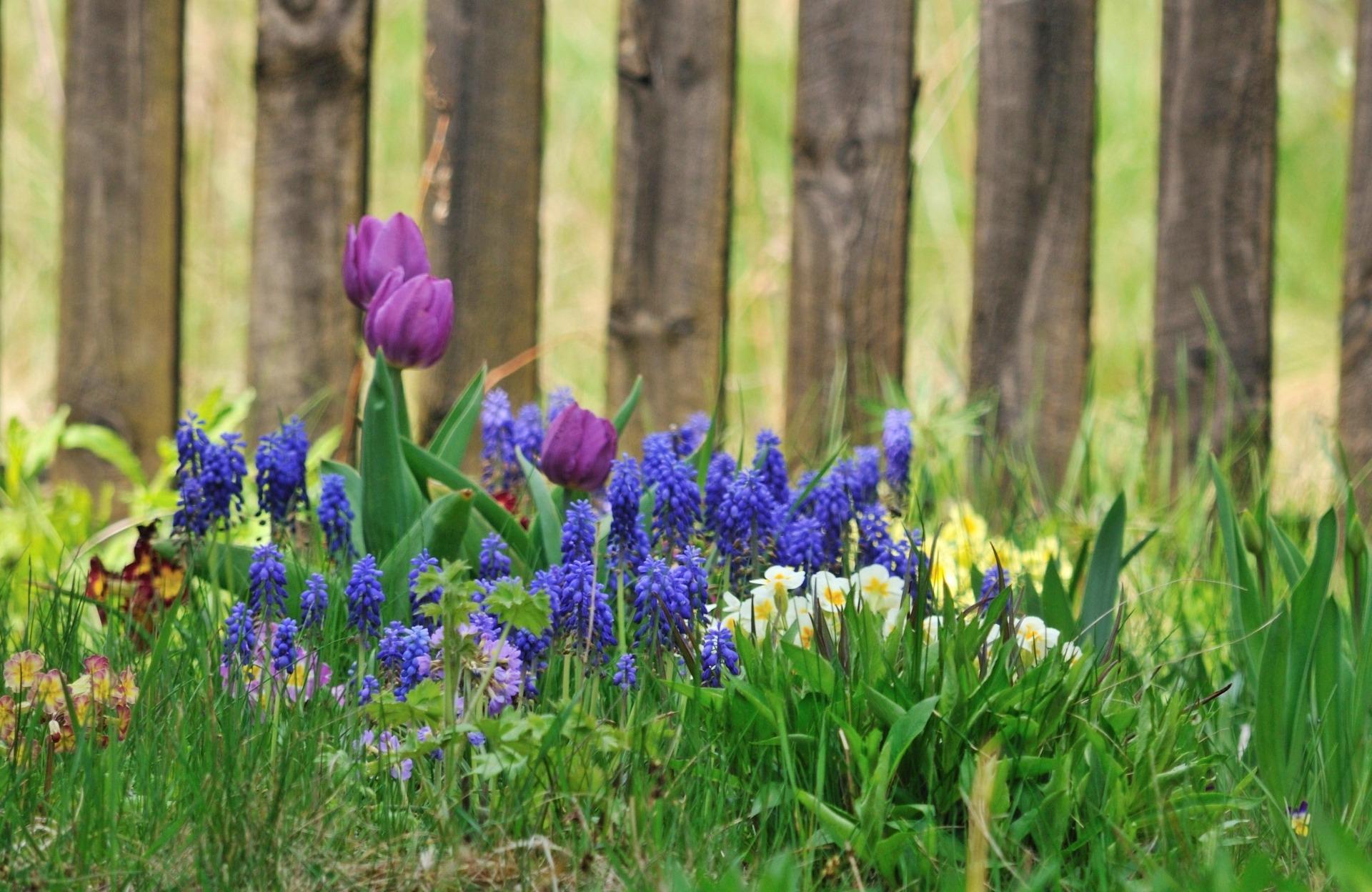 Free Fertilizer for Flowerbeds + Vegetable Gardens + Natural Lawns