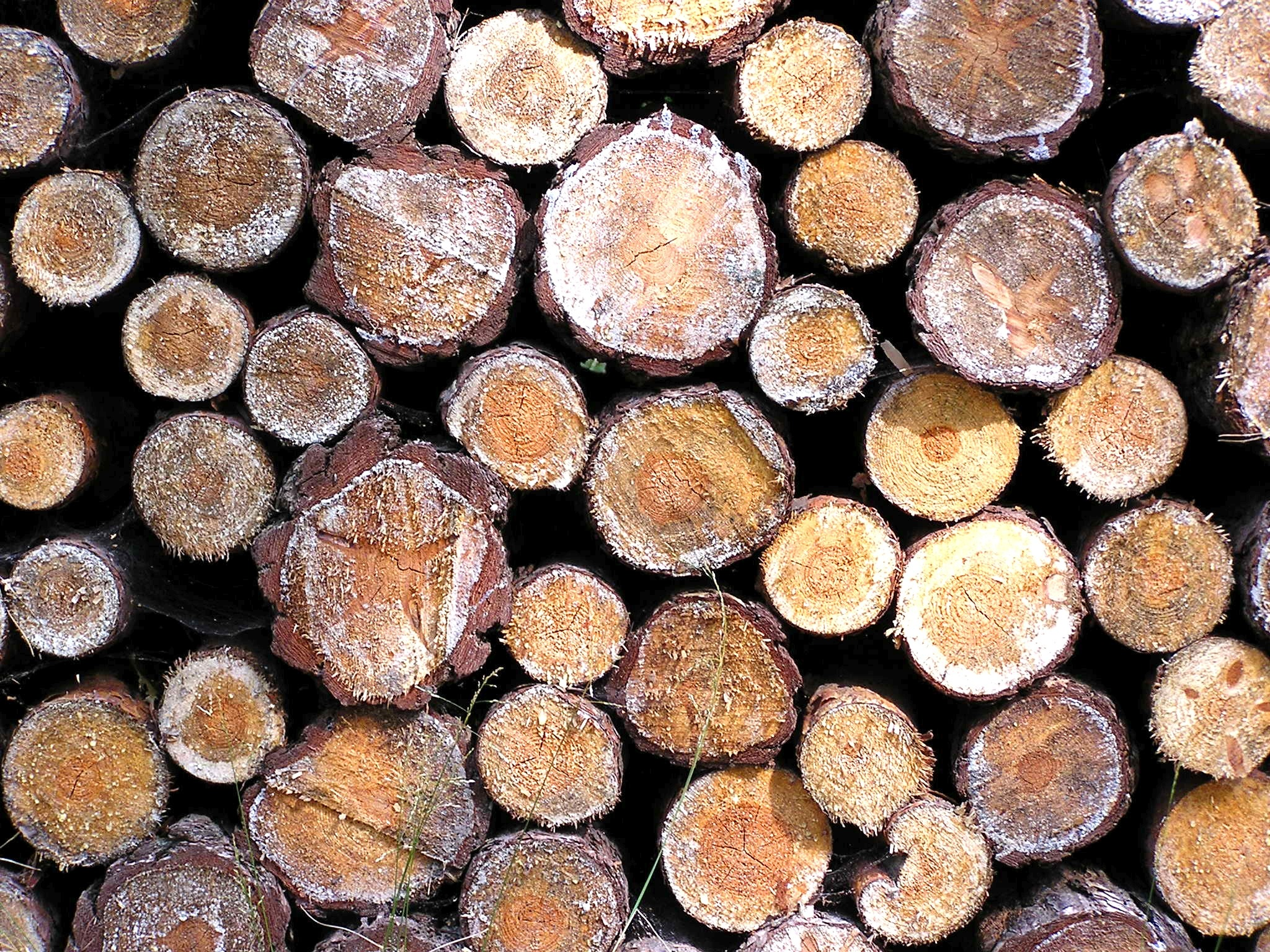 Wood Ash is Great for Your Garden