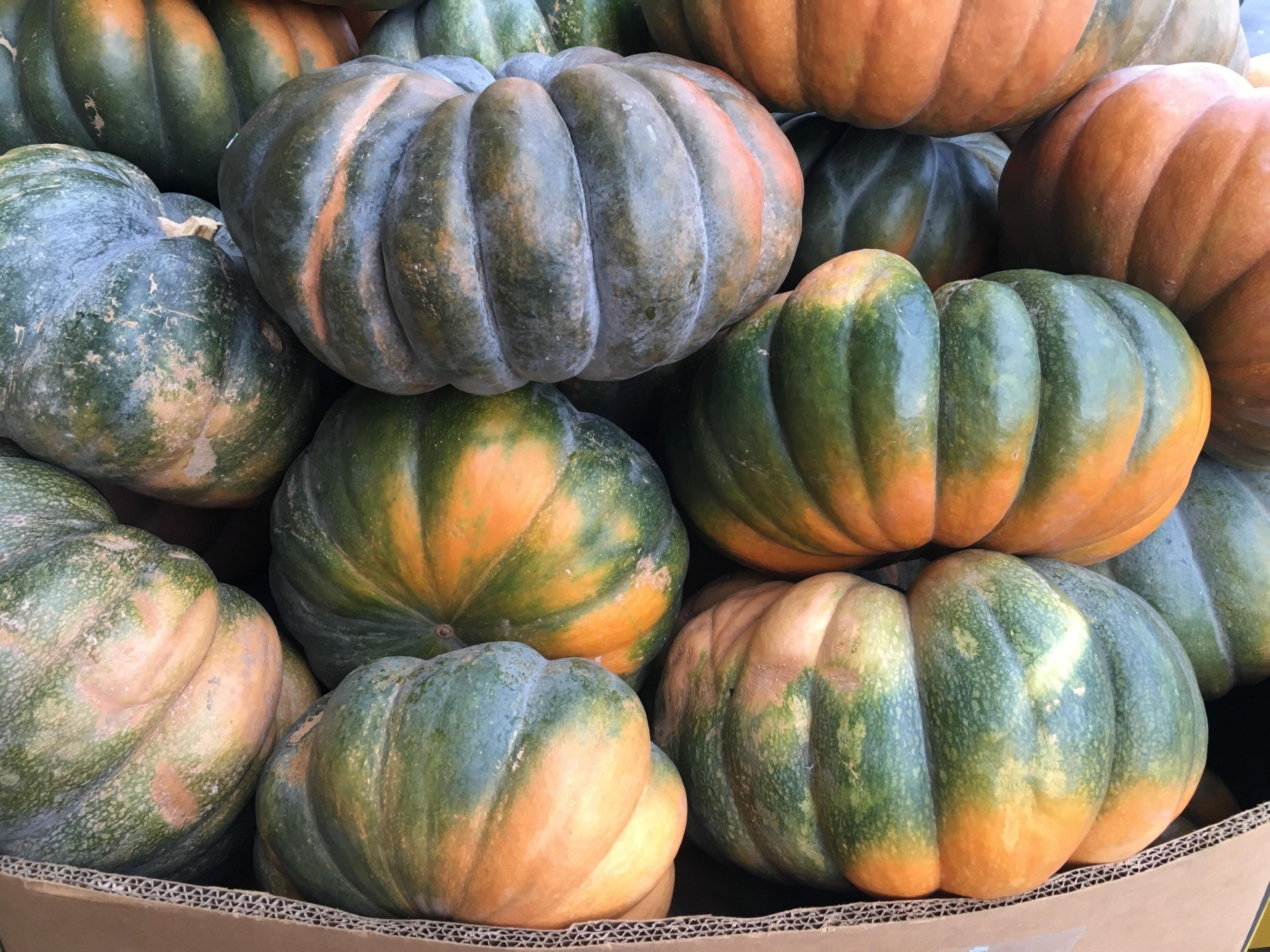 Green and Orange Pumpkins