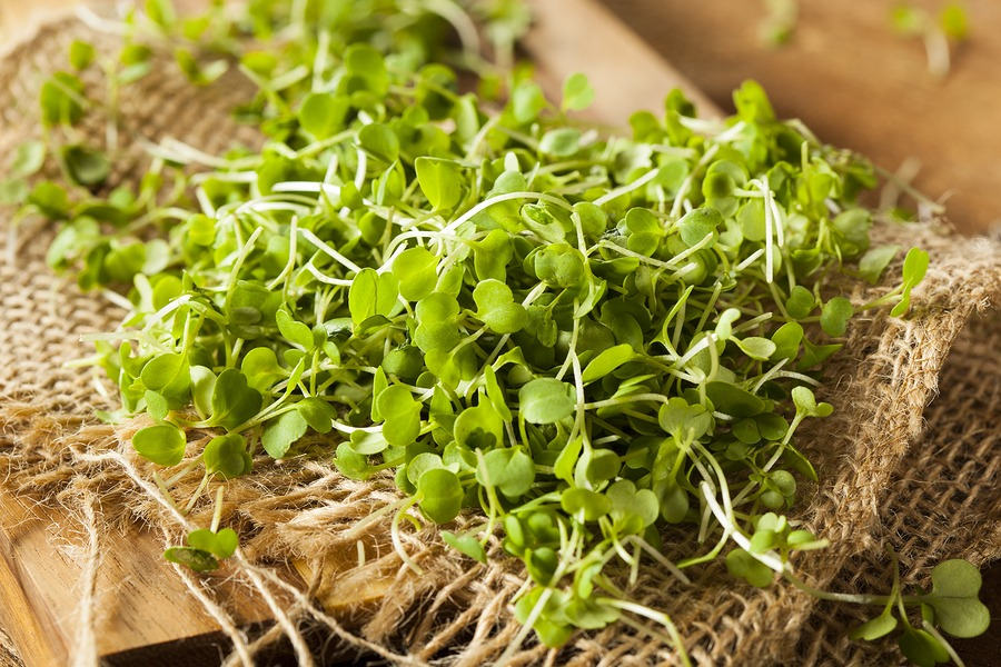 How to grow microgreens in Southern California