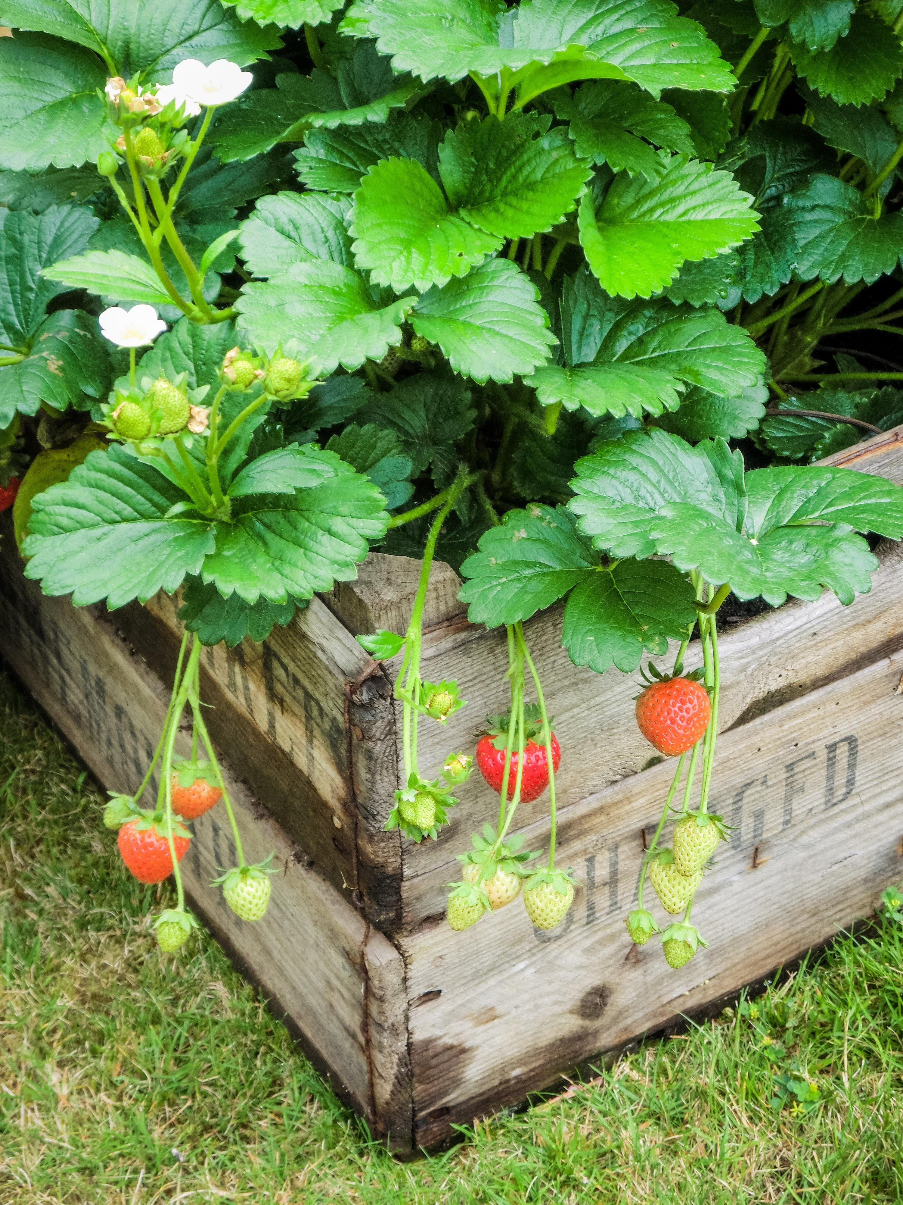 green gardening: 21 things you can recycle in your yard   install