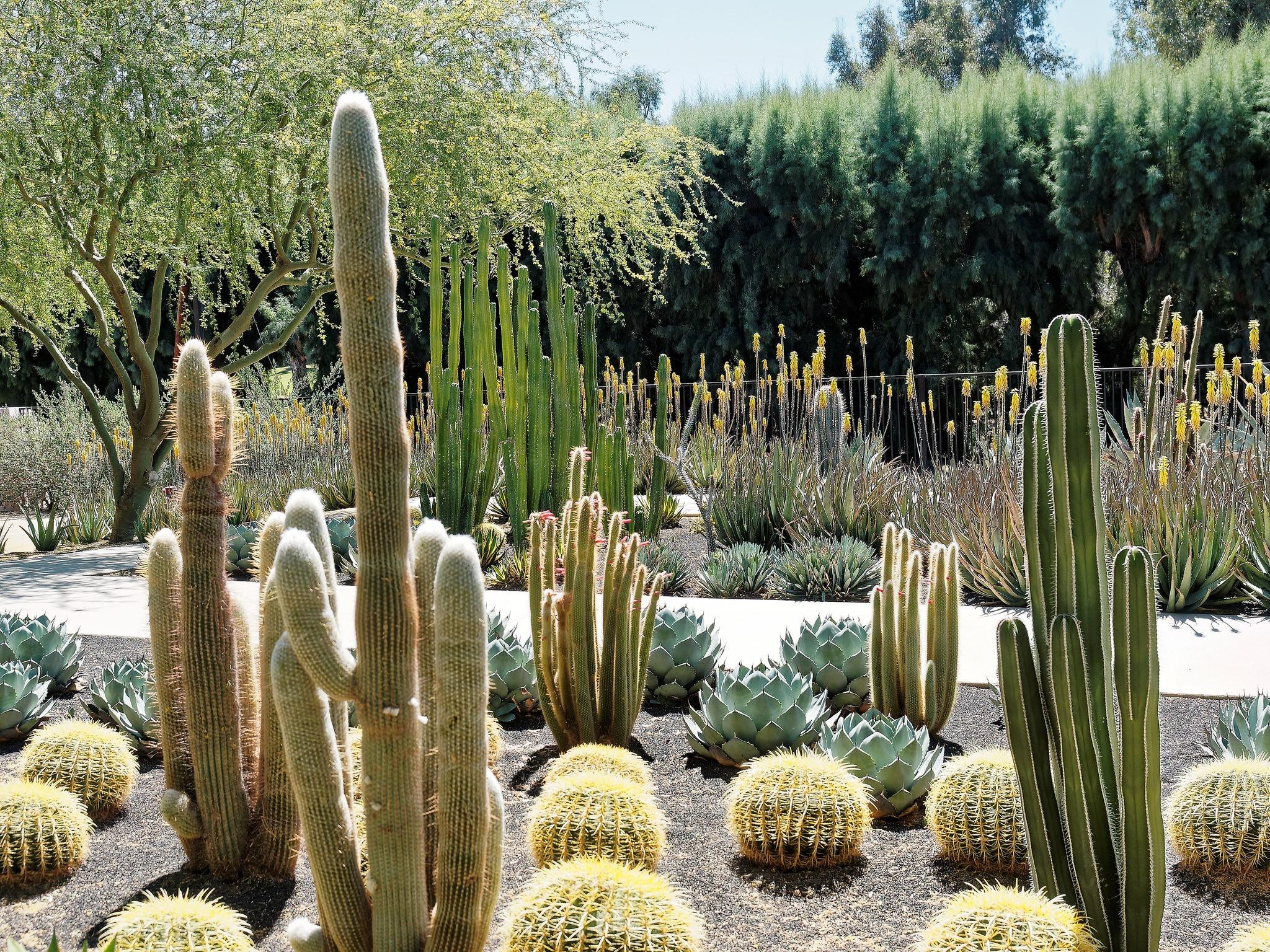 Cacti 101: How to grow a cactus garden in Southern California