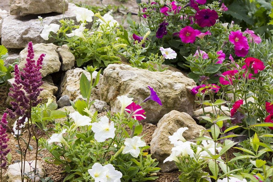 How to plan a rock garden