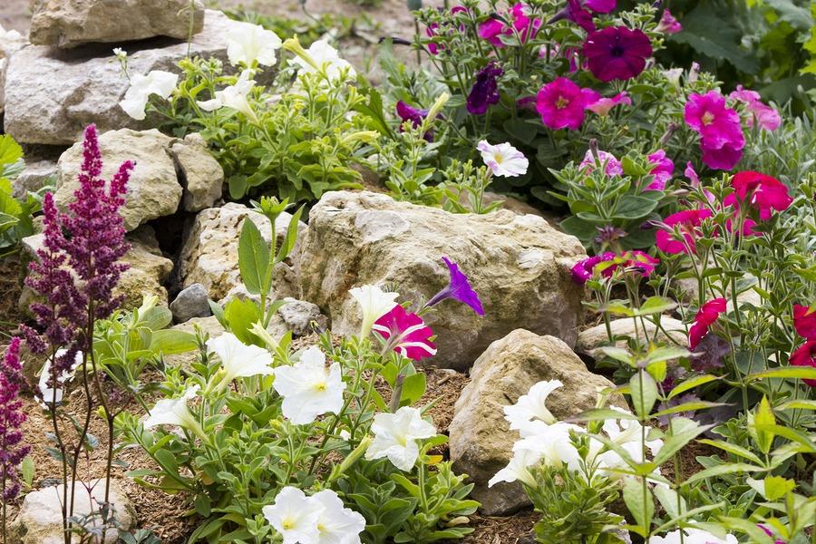 How to plan a rock garden