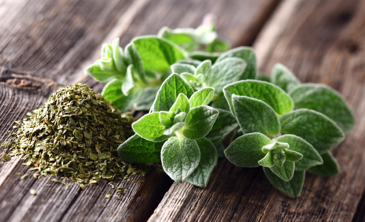 Drought-Tolerant Herbs for Southern California Gardens Oregano
