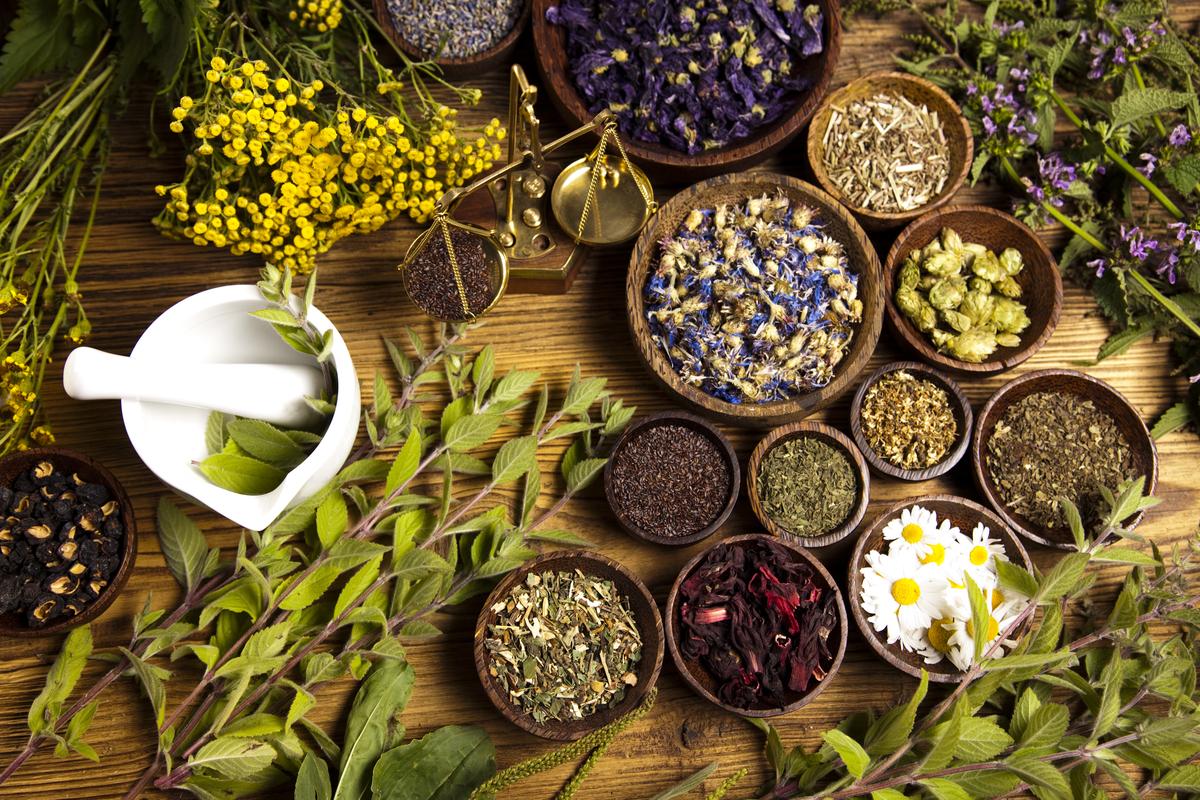 Drought-Tolerant Herbs for Southern California Gardens Tips