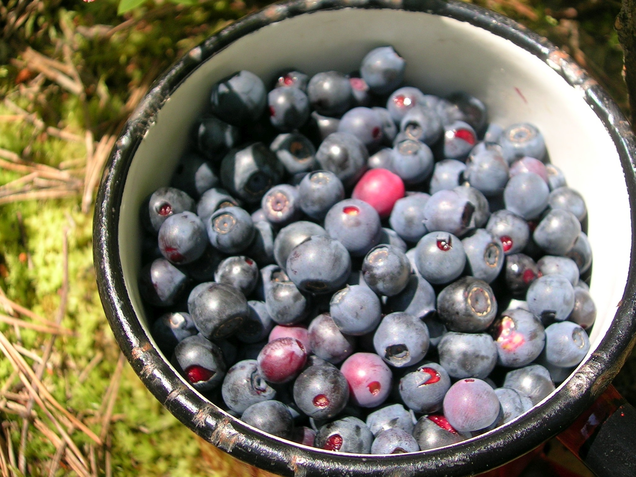 Blueberries in southern california