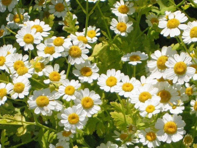 Drought-Tolerant Herbs for Southern California Gardens + Tips