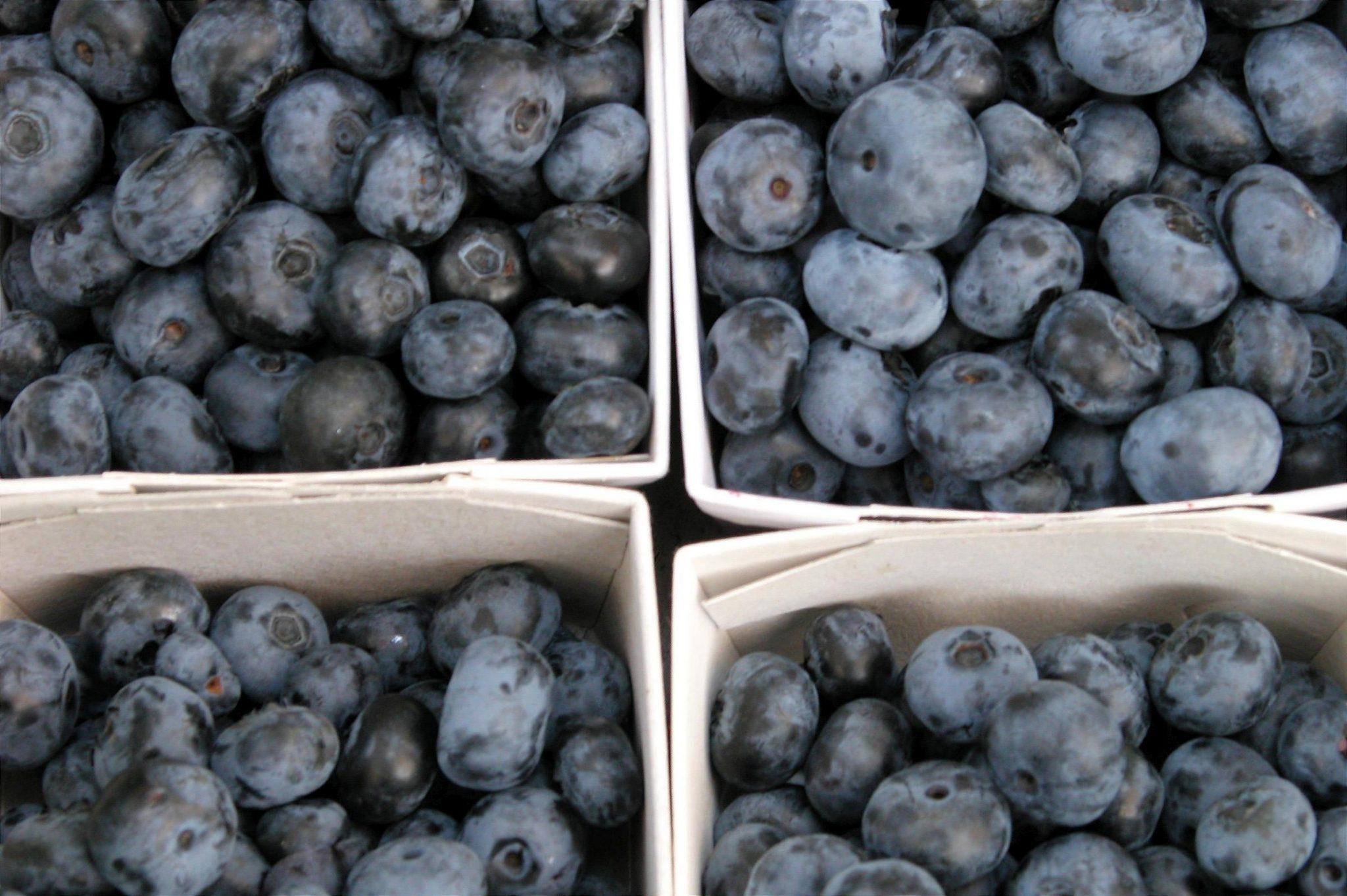 Growing Blueberries is Easy