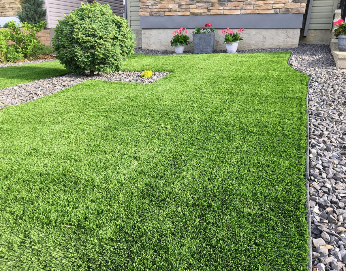 Drought-Tolerant Ground Cover Pictures