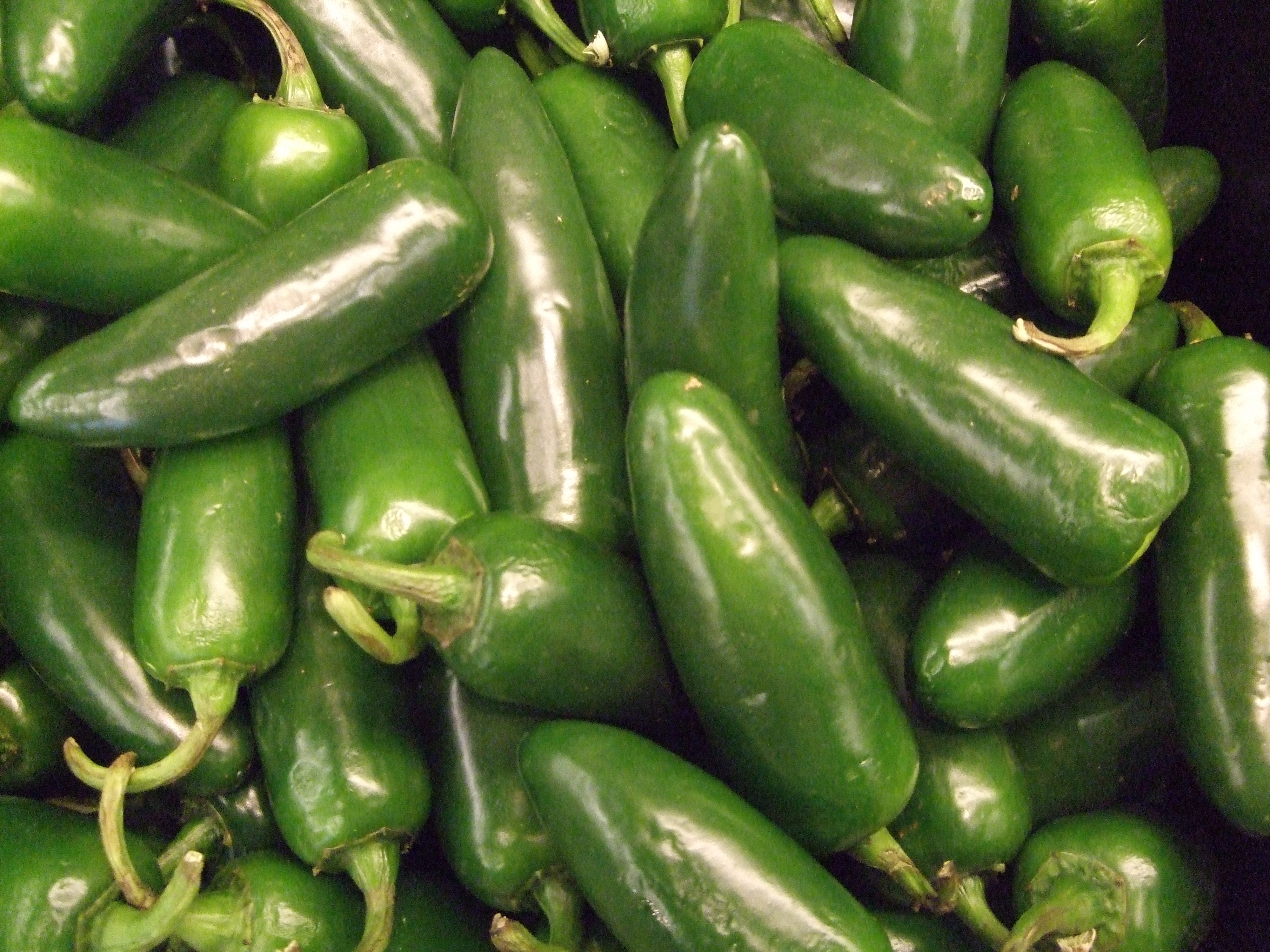 Growing Peppers Guide Pro Tips Ideas Install It Direct