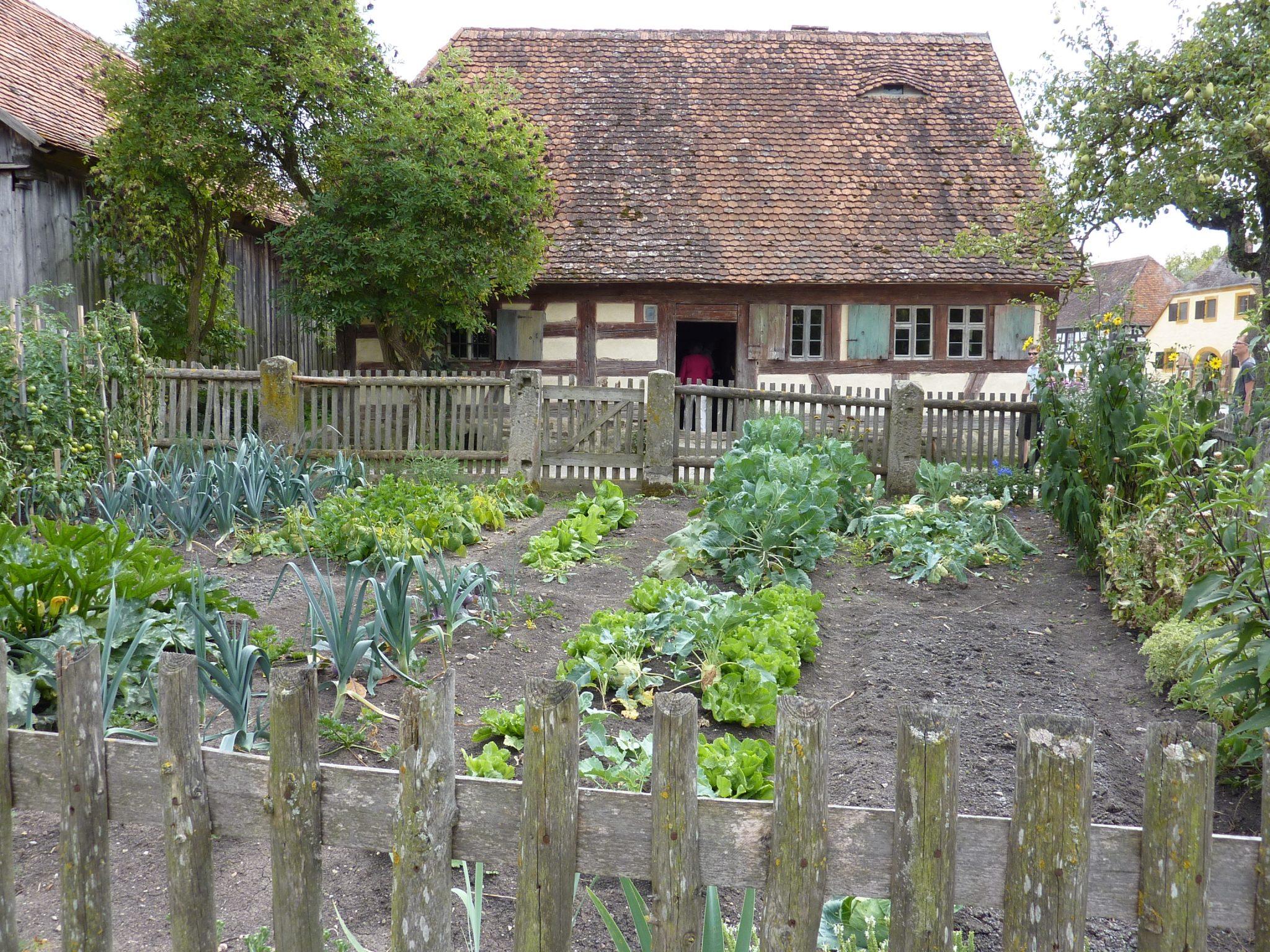 Backyard Garden for juicing