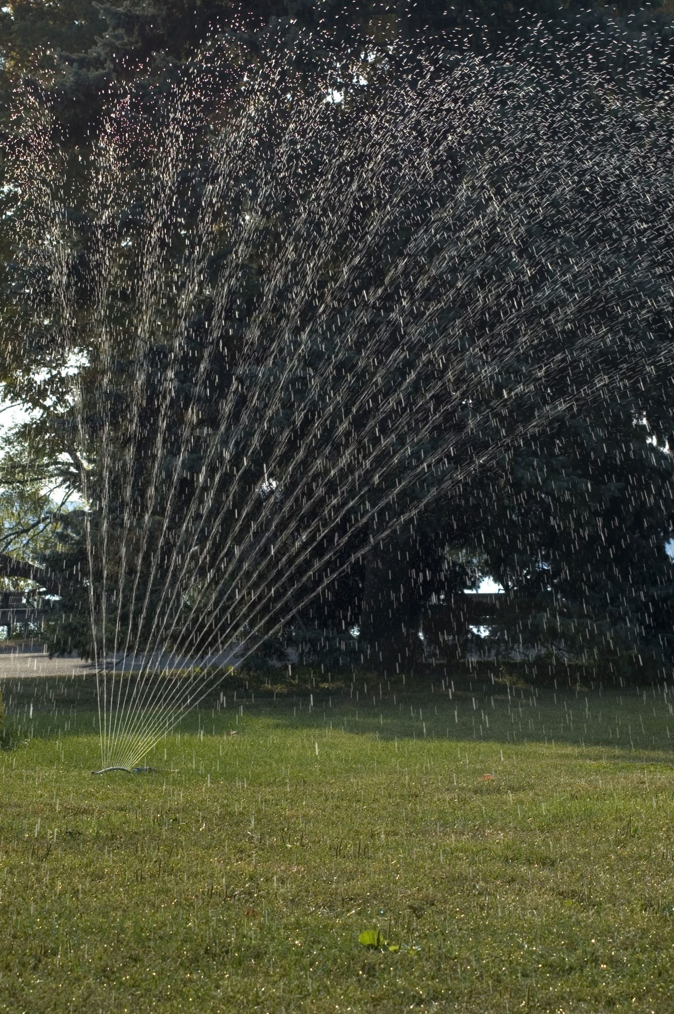 Ways to save water: Reduce Lawn Irrigation to Save Water