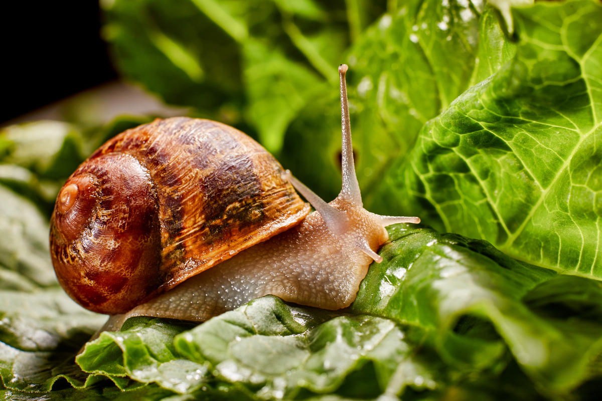 How to Naturally Keep Slugs Out of Your Garden