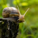 How to Naturally Protect Your Garden from Snails + Slugs