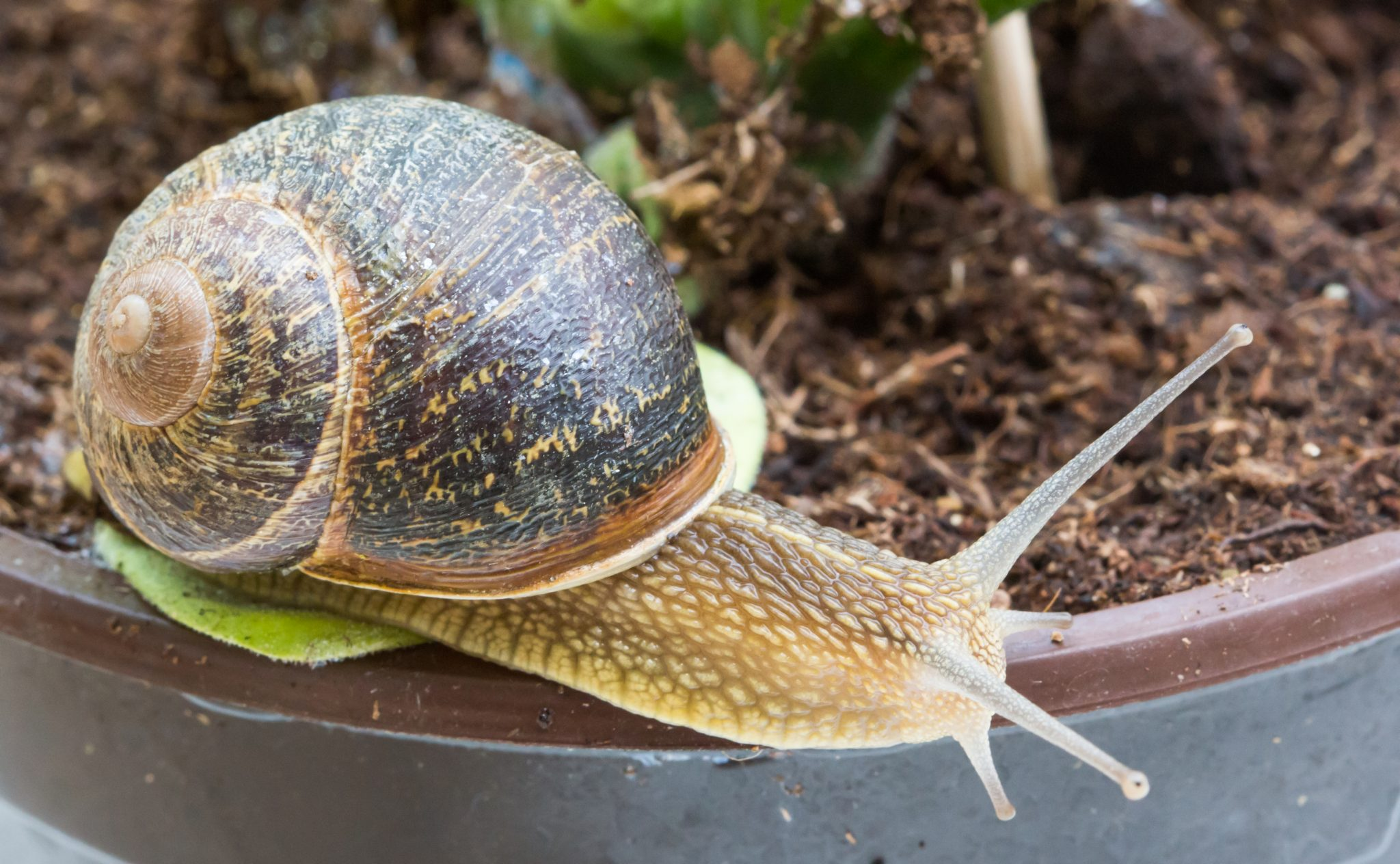How to Naturally Keep Snails + Slugs Out of Your Garden (NO ...