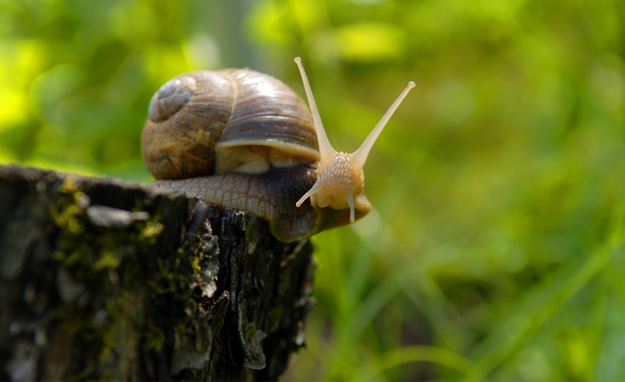 How to Keep Snails + Slugs Out of Your Garden