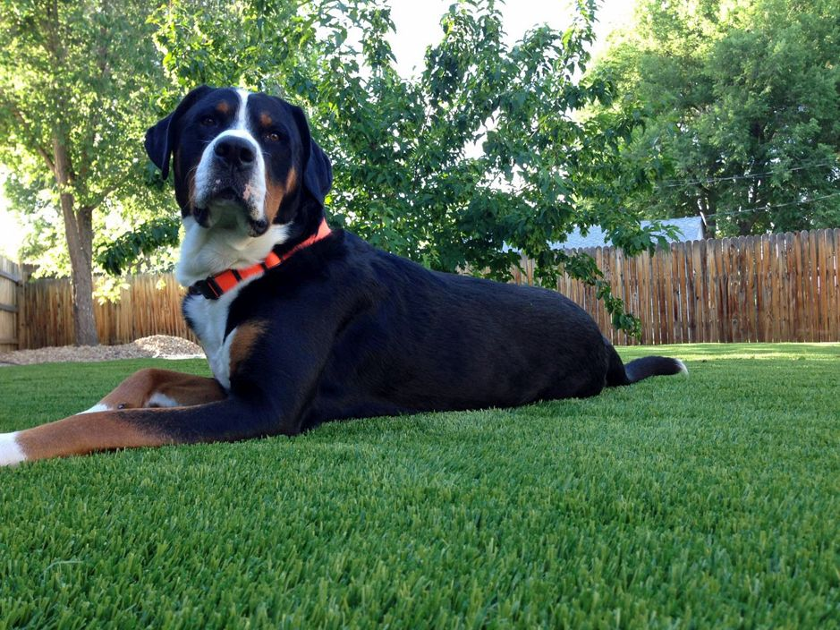 Pet Turf cleaning products
