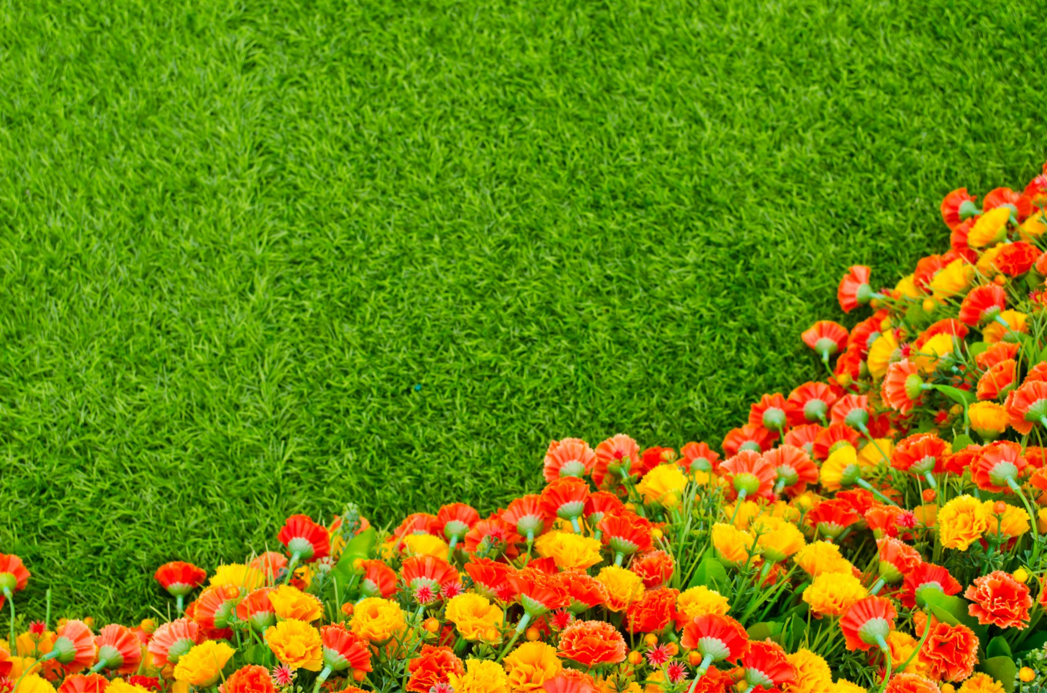 artificial grass real plants