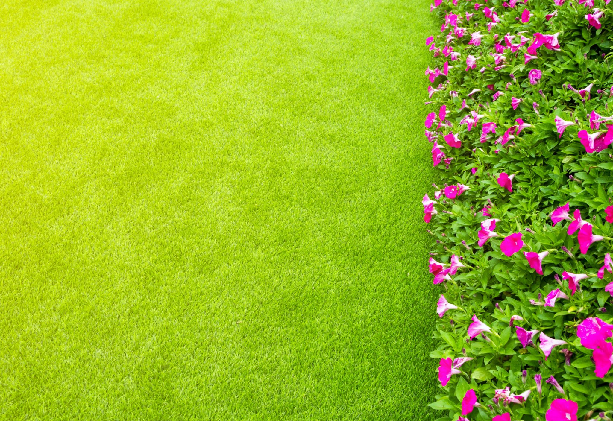 artificial turf living plants