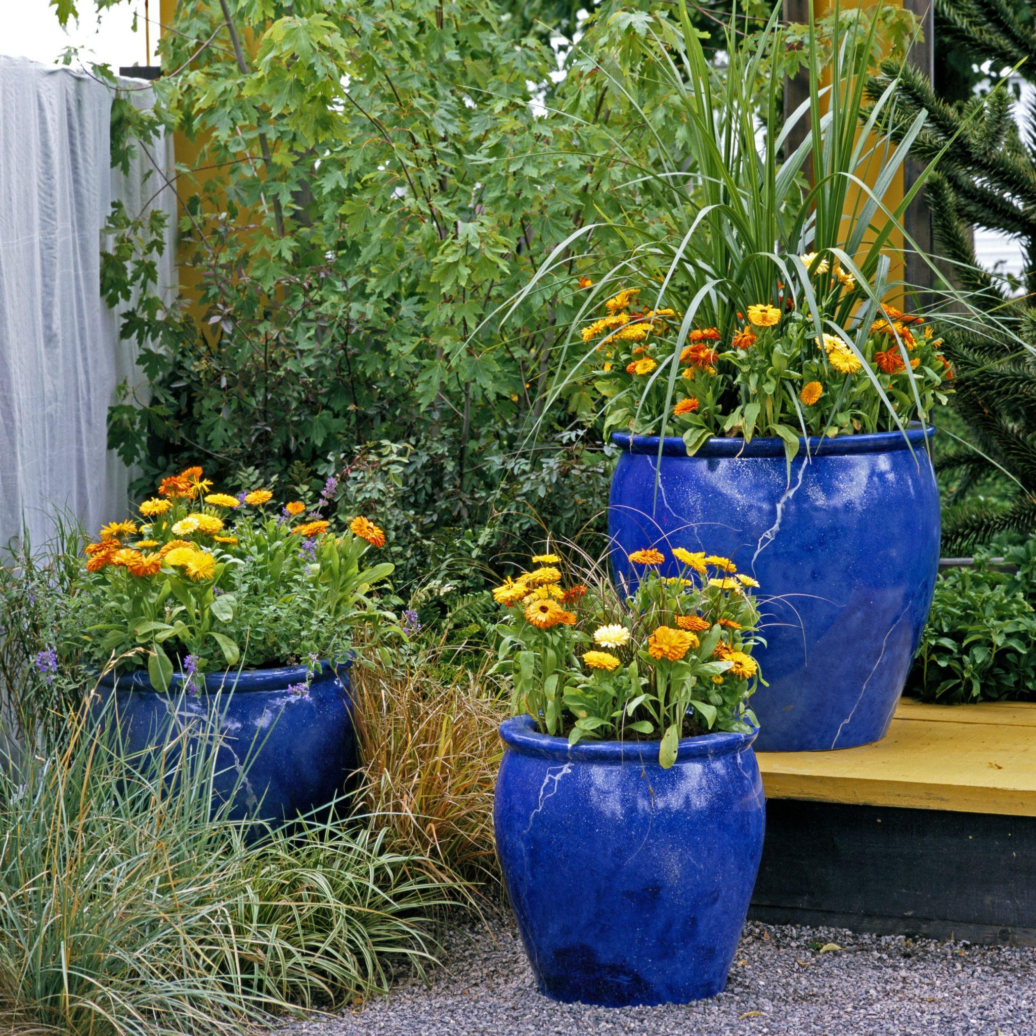 container gardening patio pots