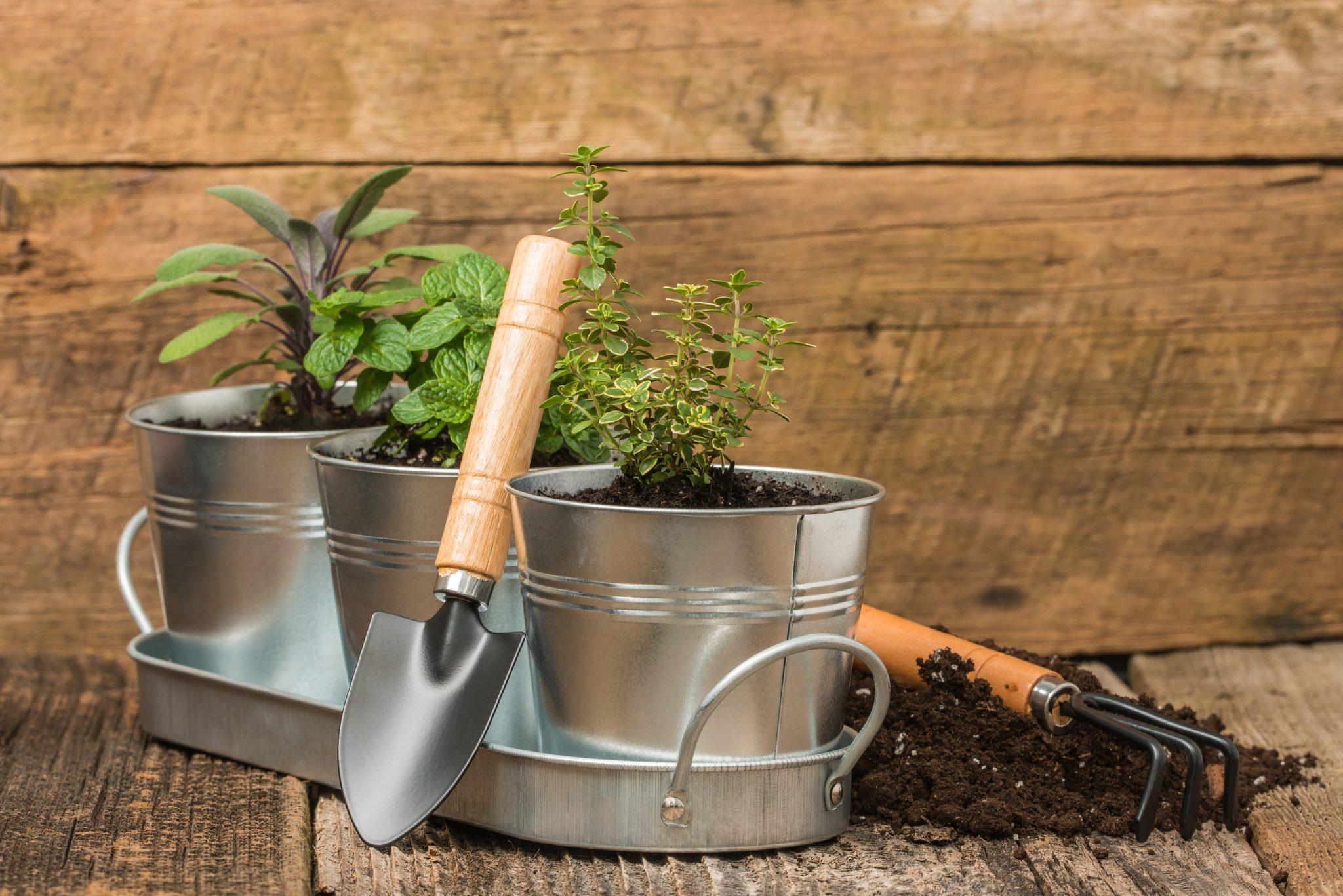 container gardening pots