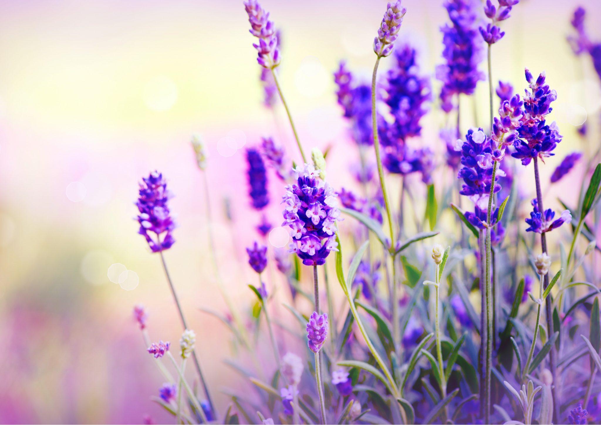 herb garden design ideas