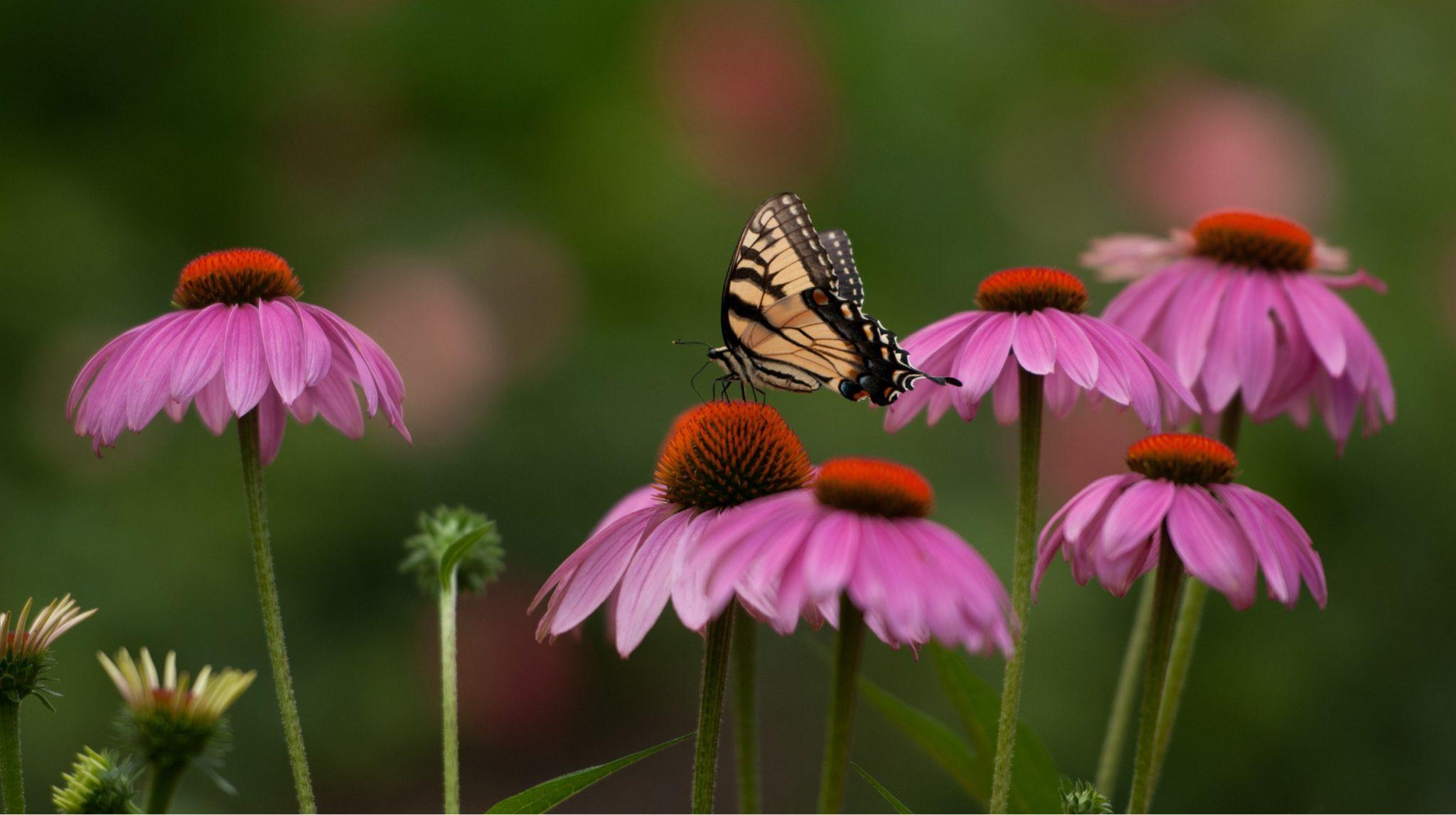 Ornamental Herb garden ideas