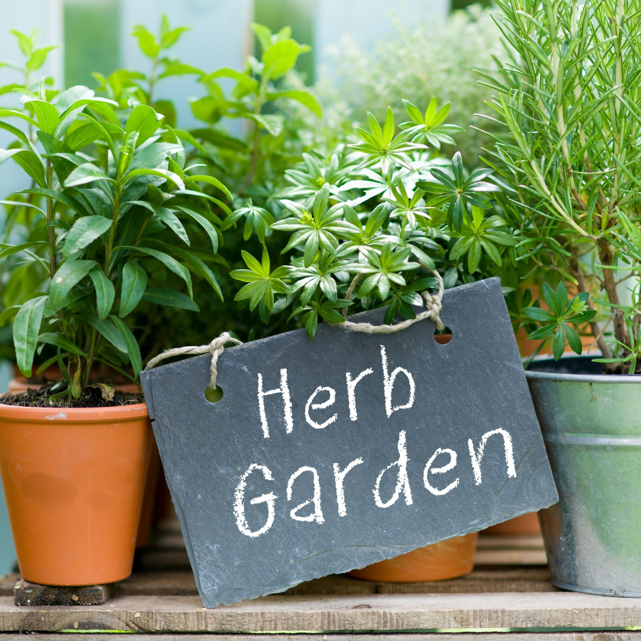 Ornamental Herb garden