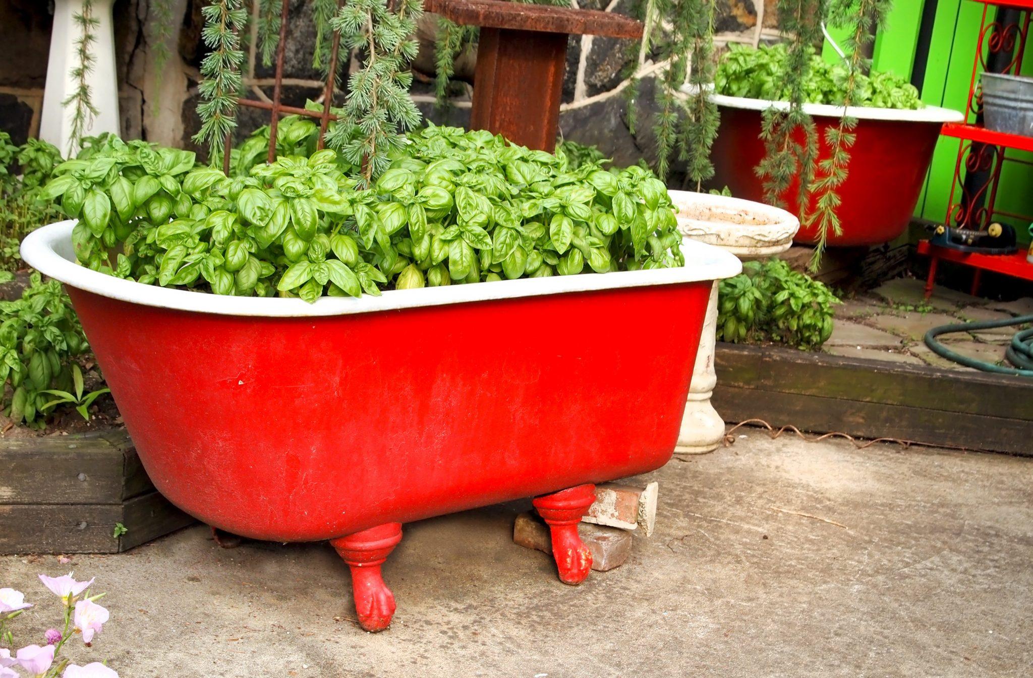 patio container gardening