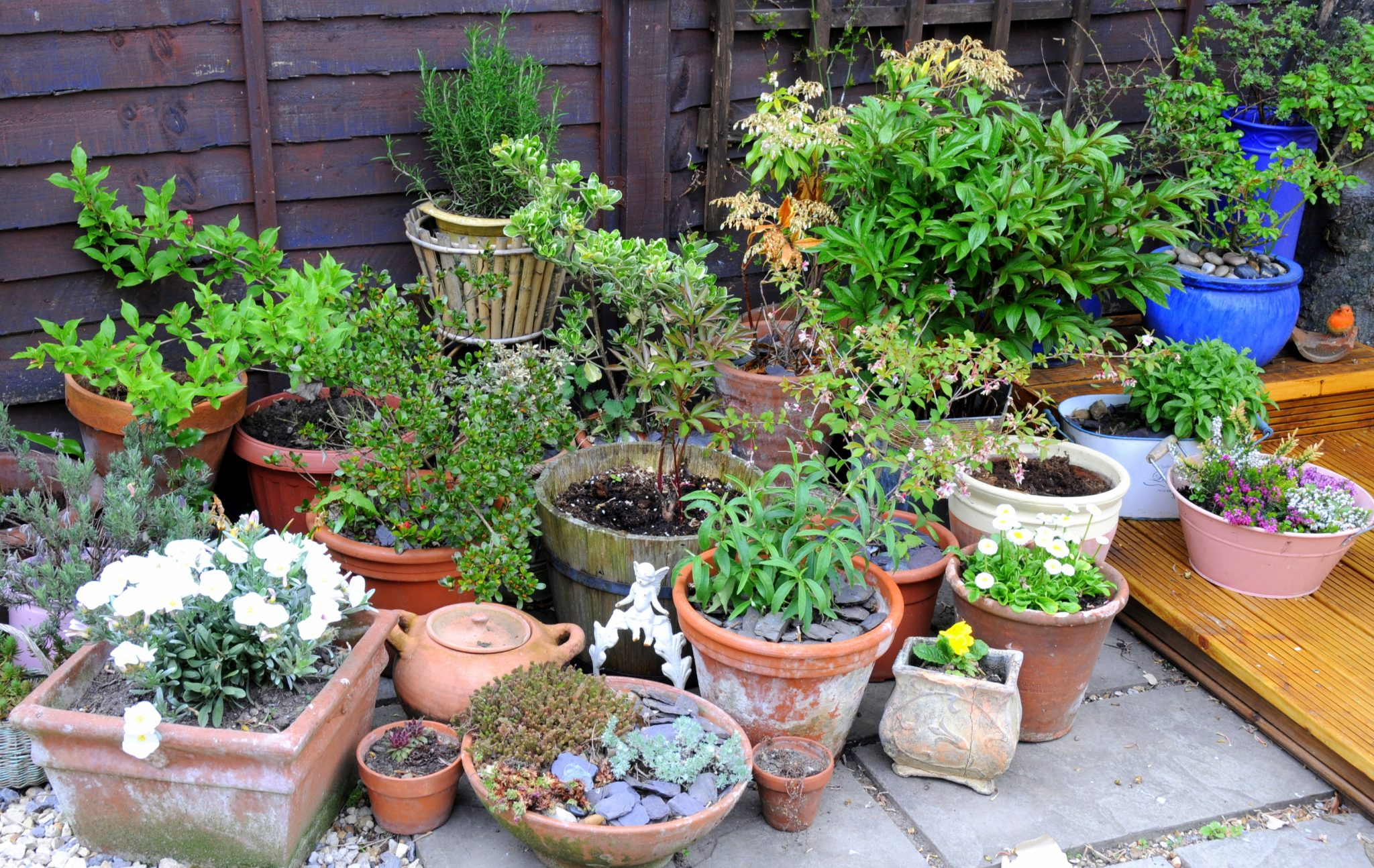 How to Choose Pots for a Patio