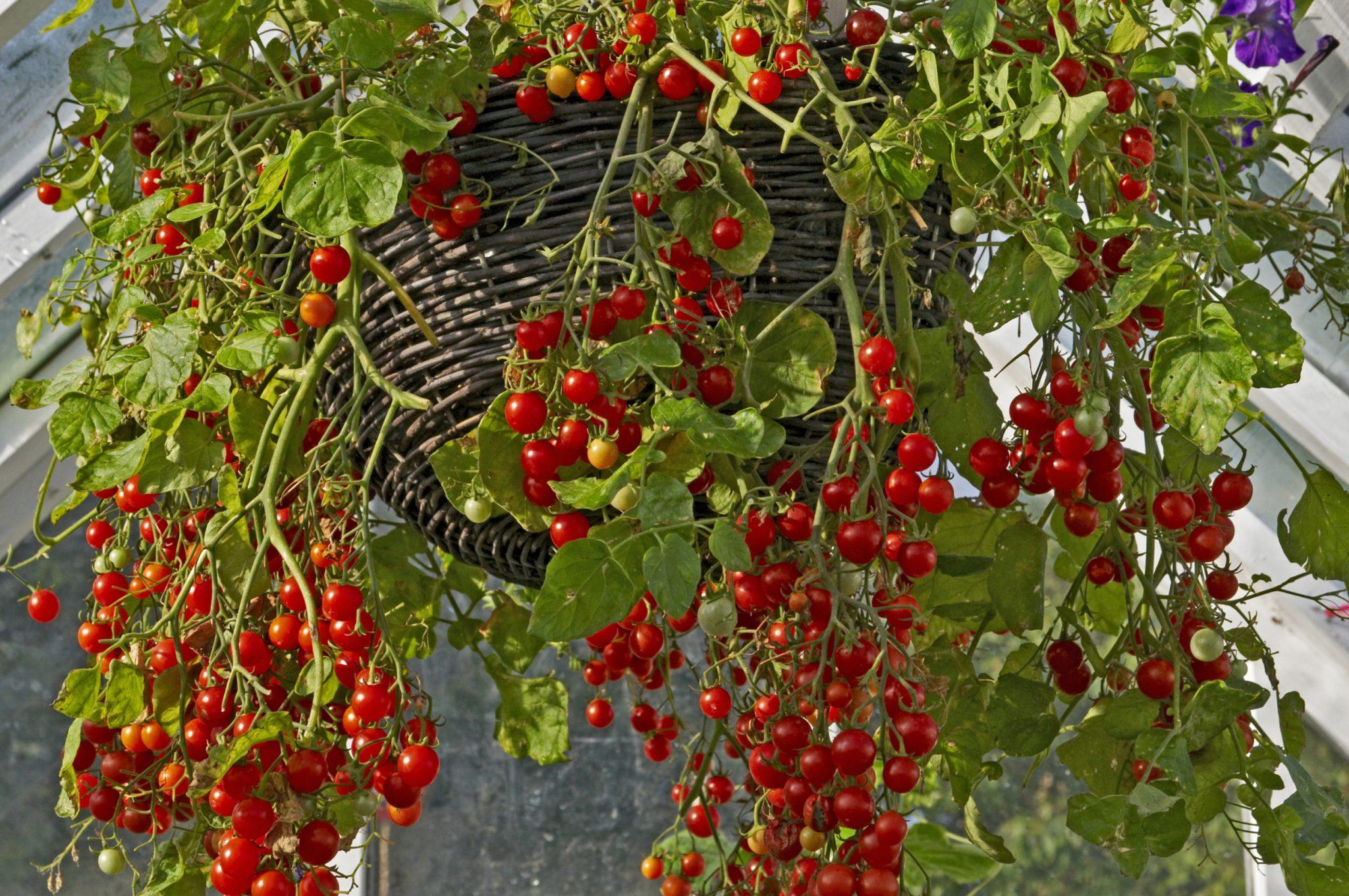 hanging gardens