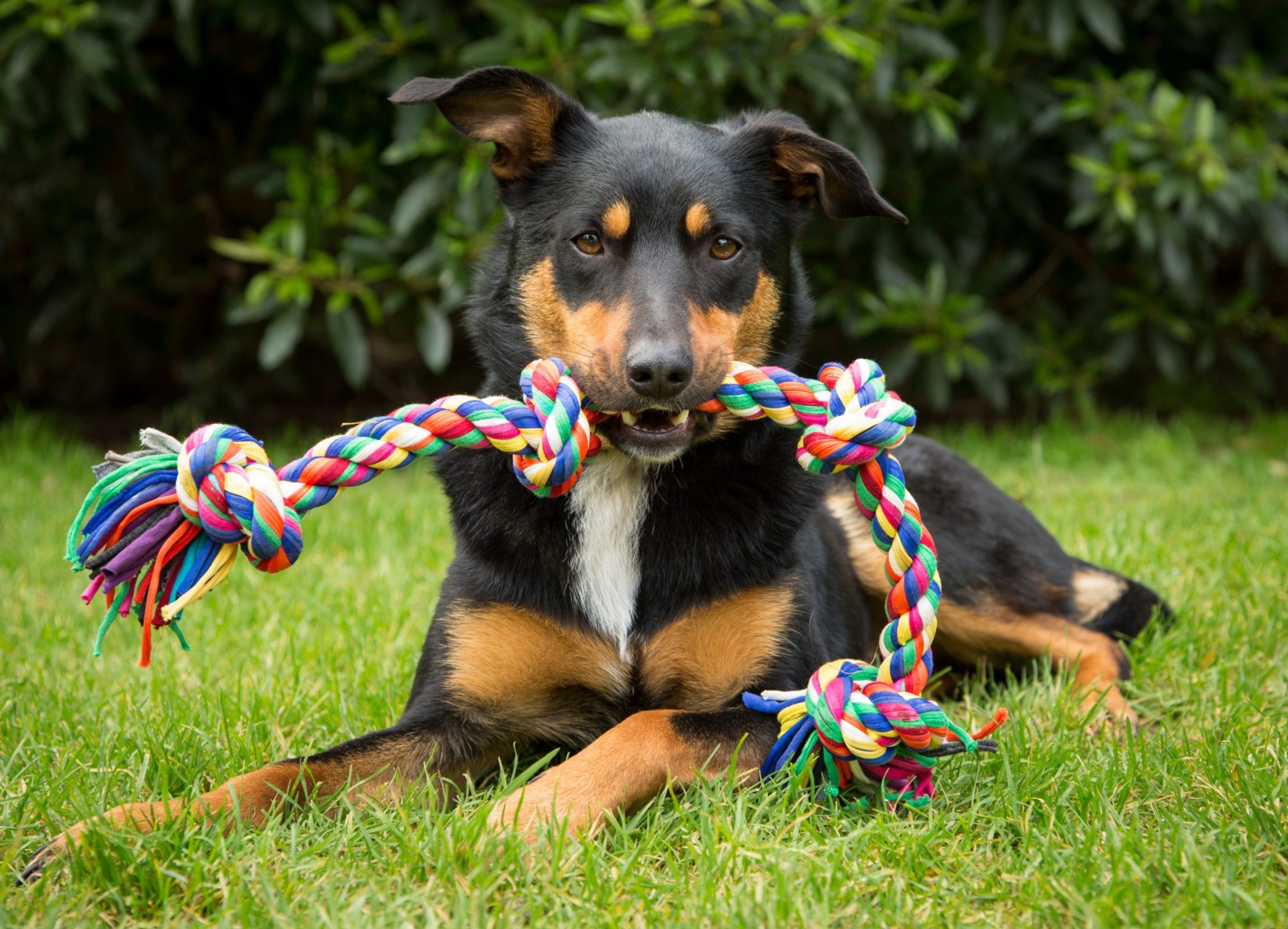 dog run cleaning tips