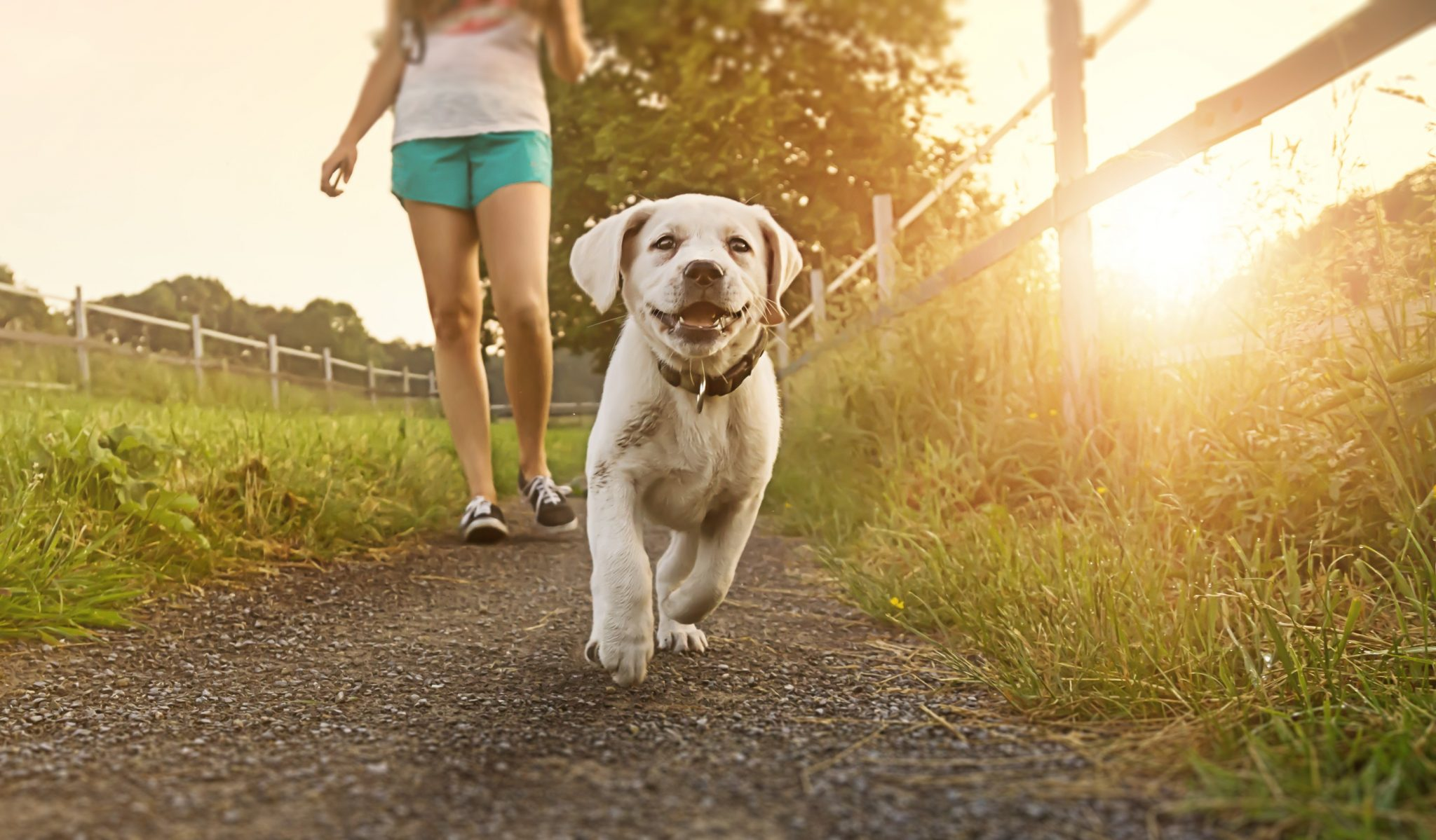 dog run maintenance
