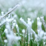 Does Artificial Grass Freeze