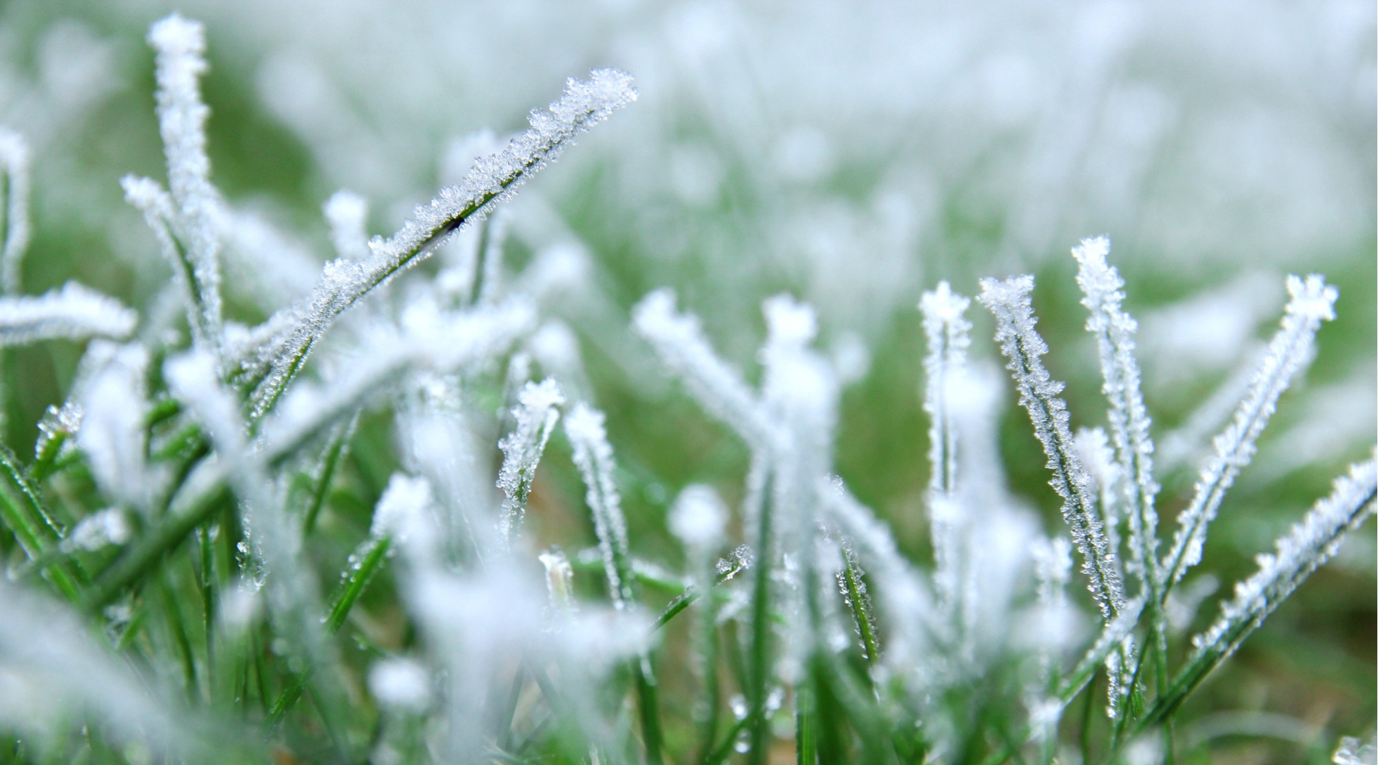 Does Artificial Grass Freeze