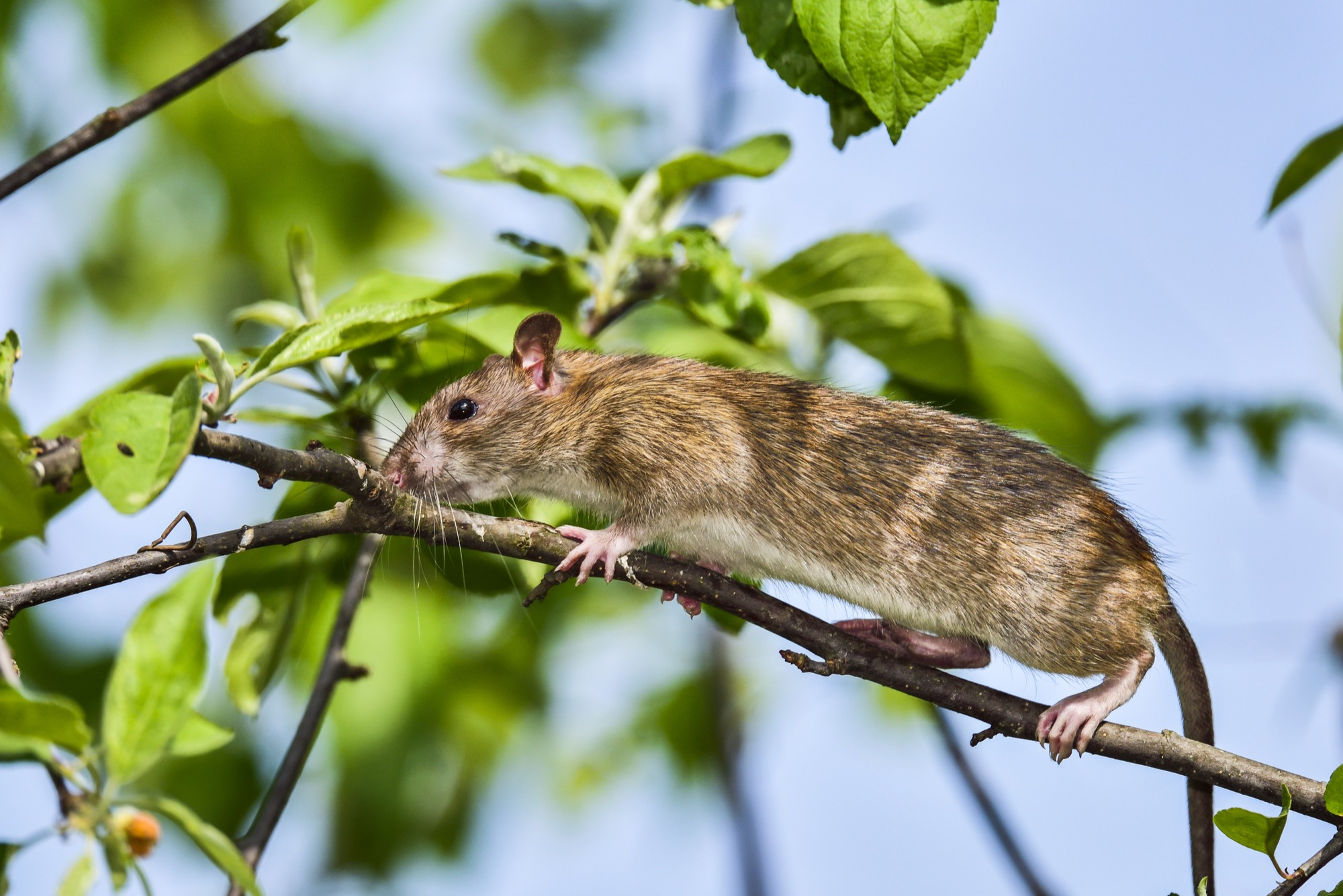 47 HQ Pictures How To Get Rid Of Mice In Your Backyard ...