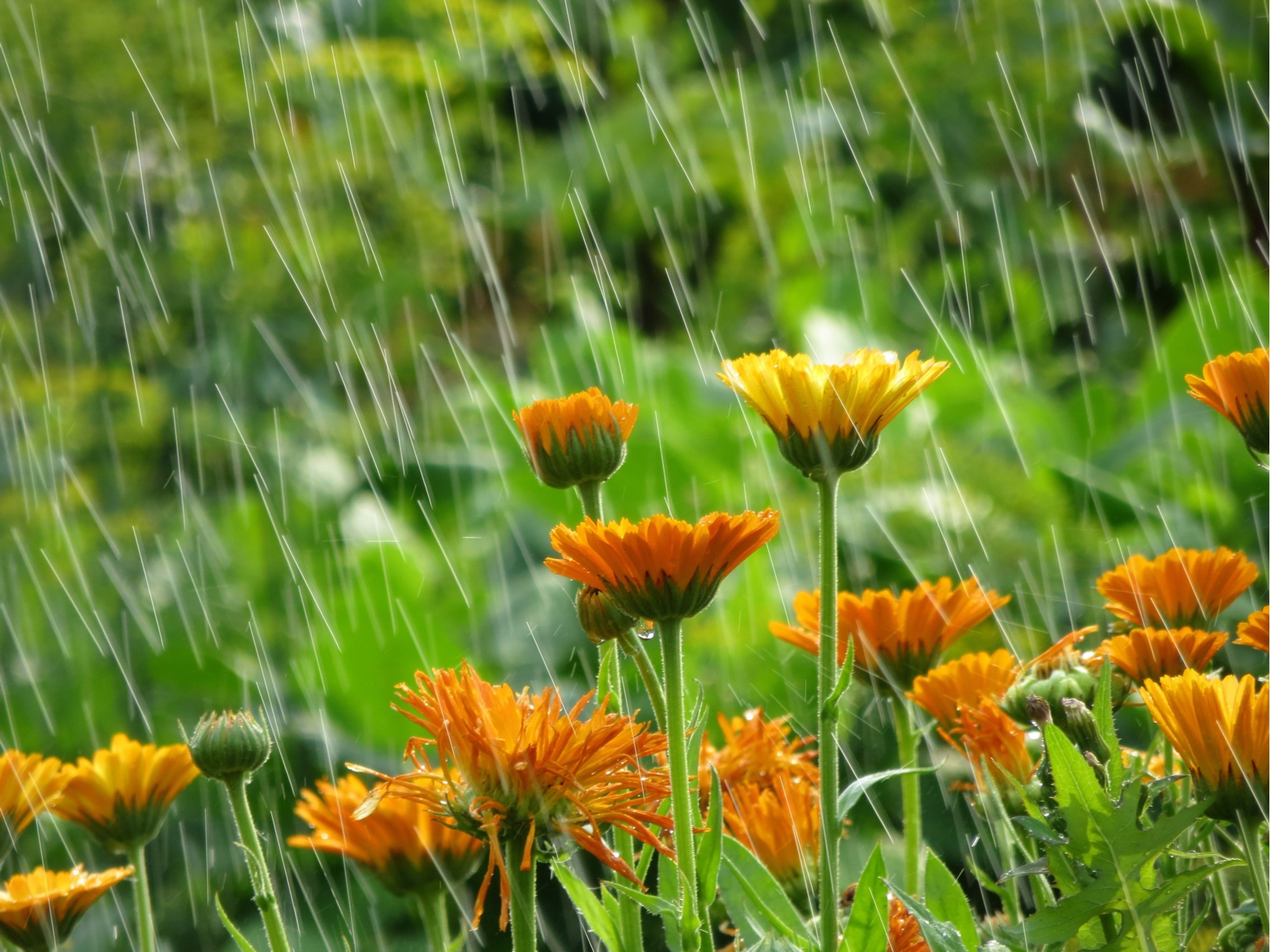 How to Prepare for Rain After Drought